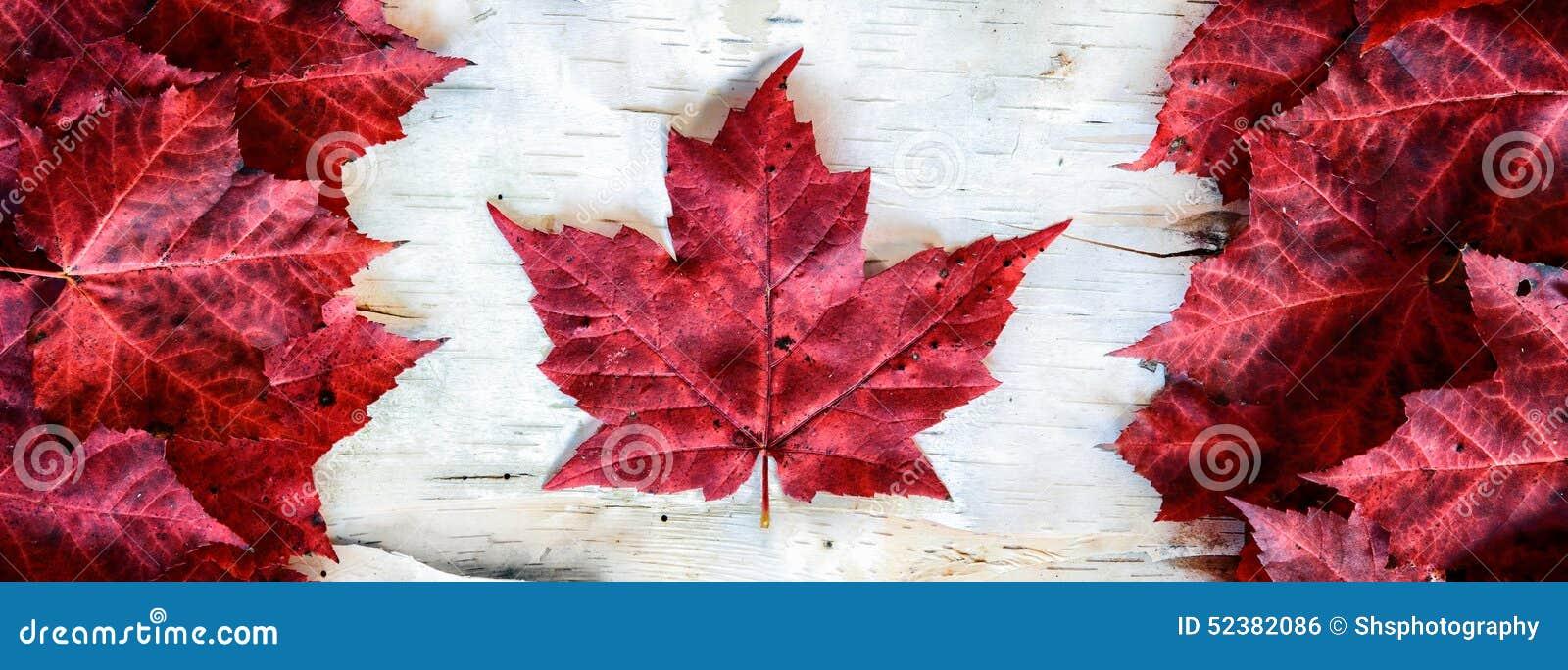 De Vlag van Canada met Bladeren op Berk wordt gemaakt - Banner die