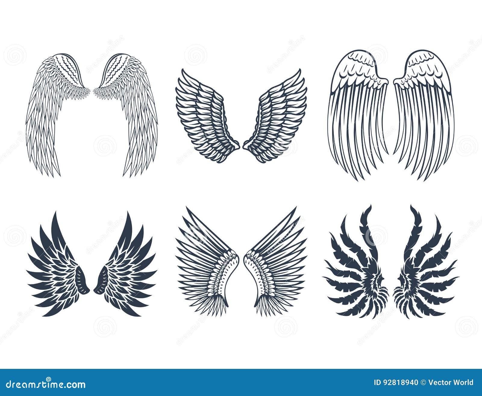 De vleugels isoleerden dierlijke van de de vogelvrijheid van de veerpignon van de de vlucht natuurlijke vrede het ontwerp vectori