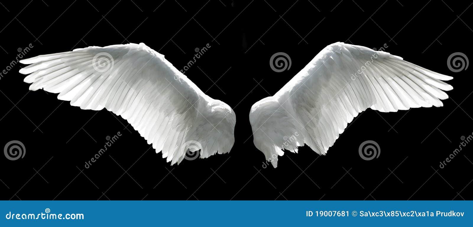 De vleugels van de engel