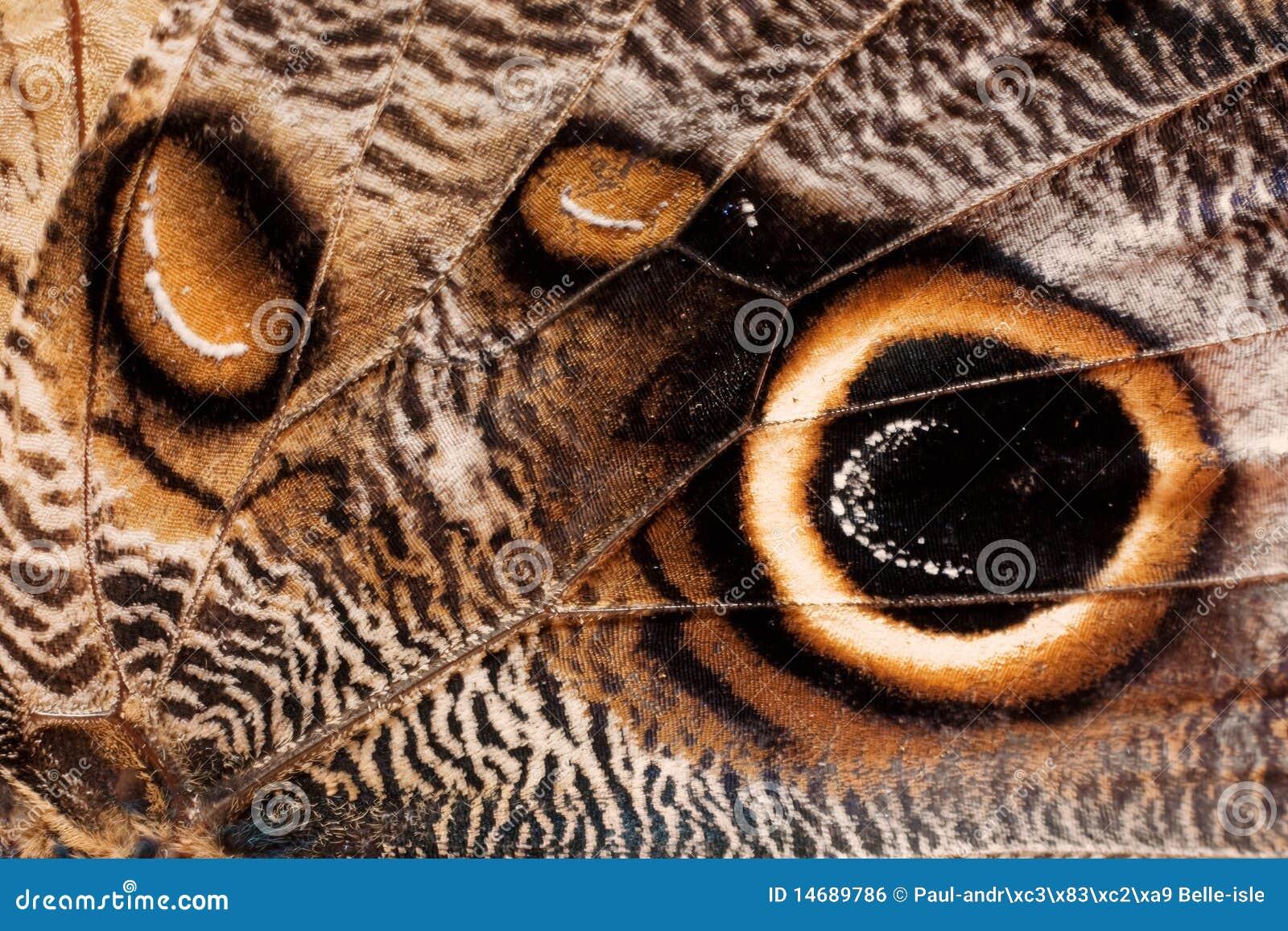 De vleugeltextuur van de vlinder