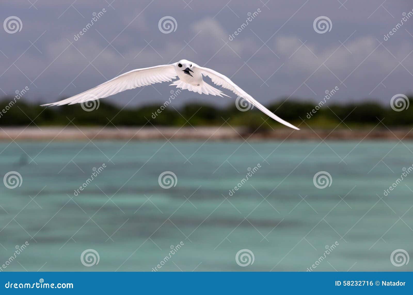 De vliegende Vogel van de Feestern