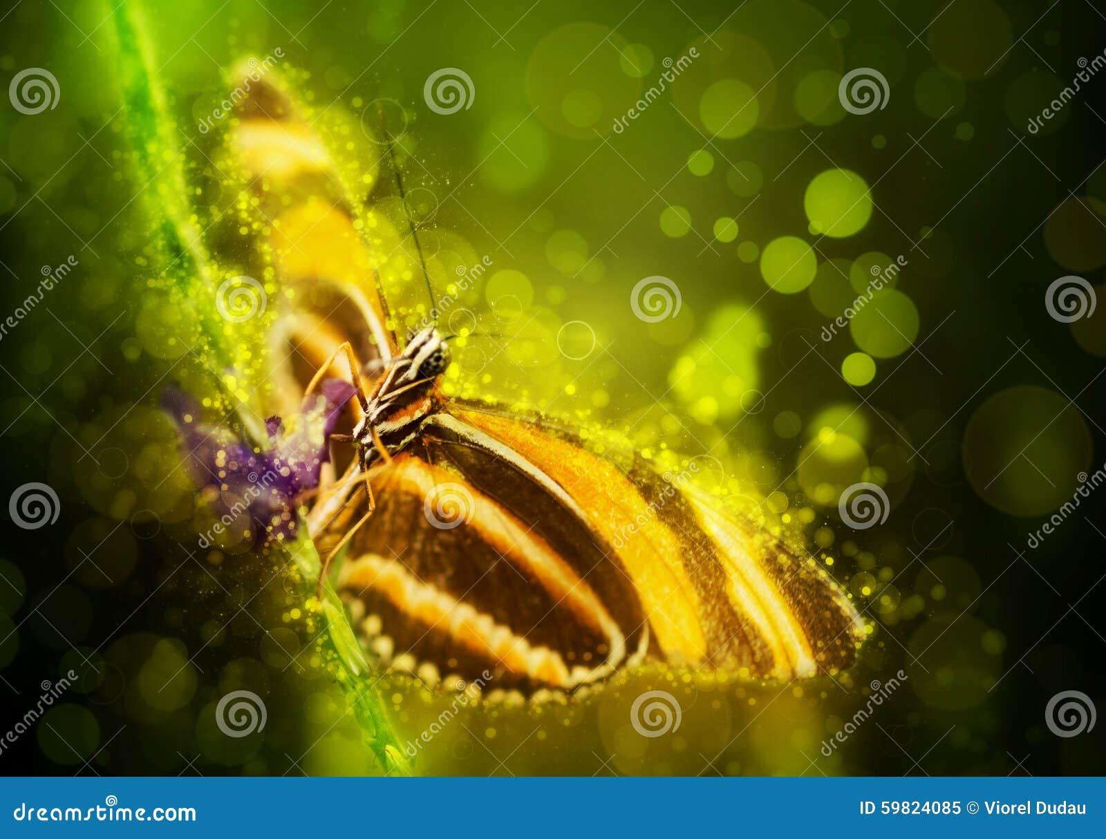 De vlinder van de fantasie