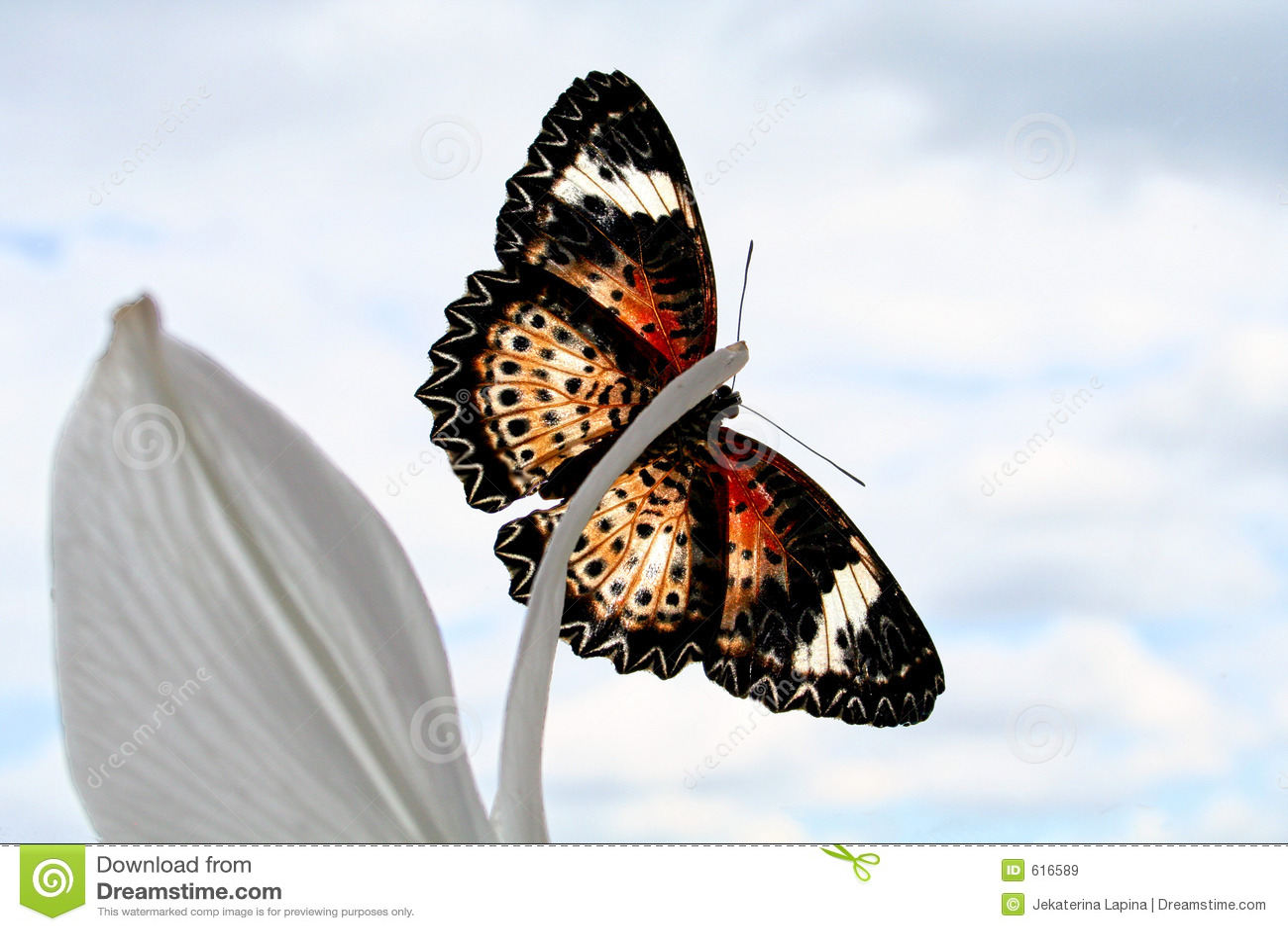 De Vlinder van de kleur op lelie