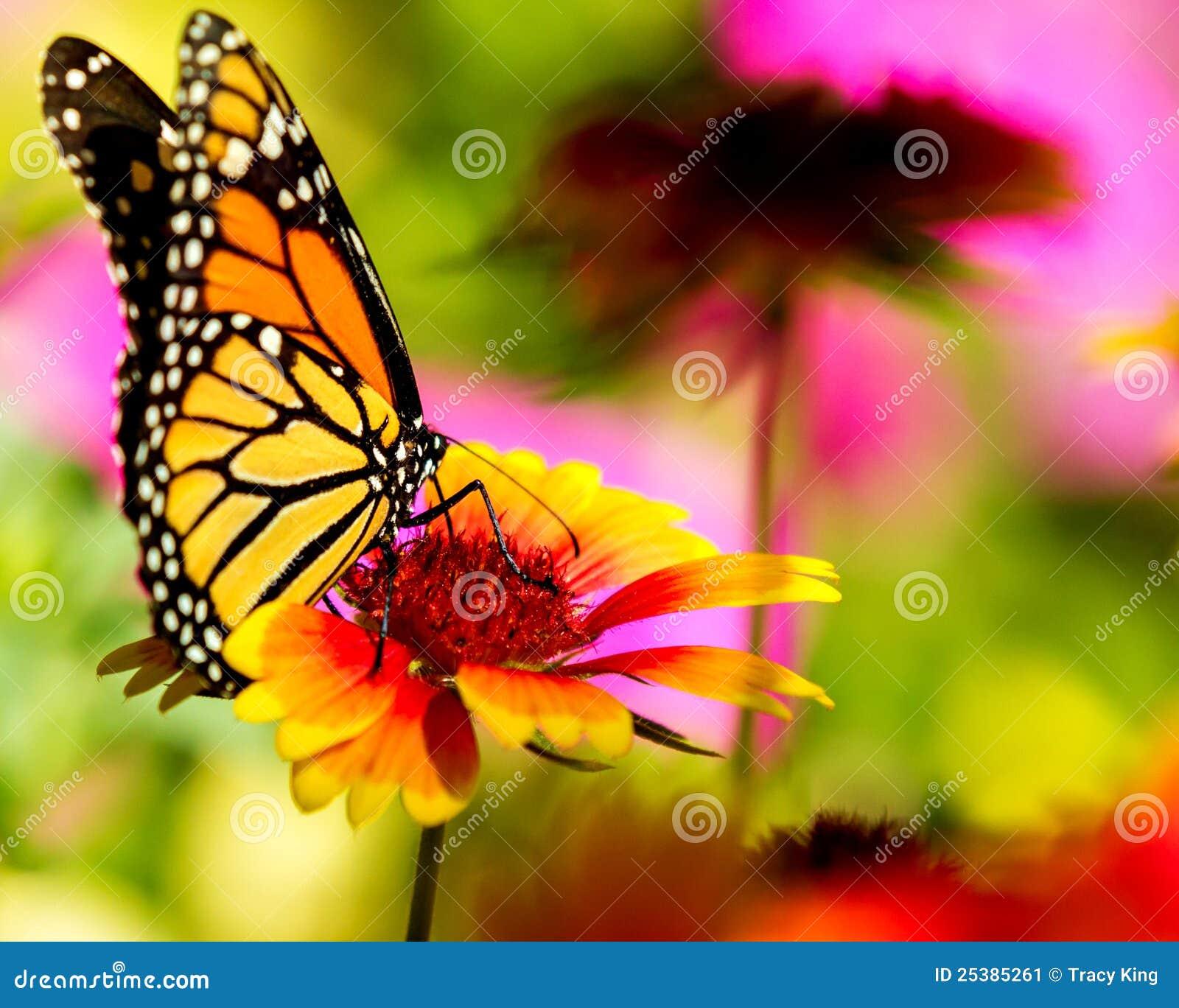 21 mooie kleurrijke vlinder - photo #37