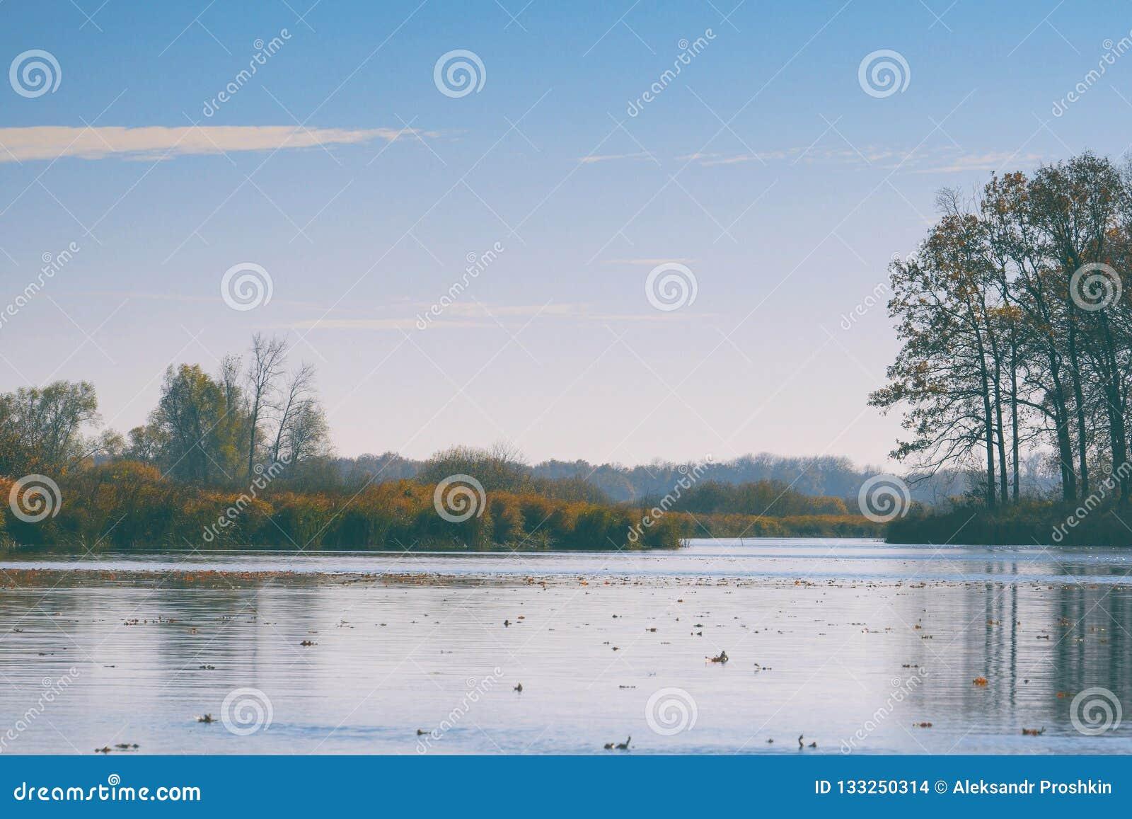 De vlotter van de herfstbladeren op water Meer of rivier met stil water in het de herfstseizoen
