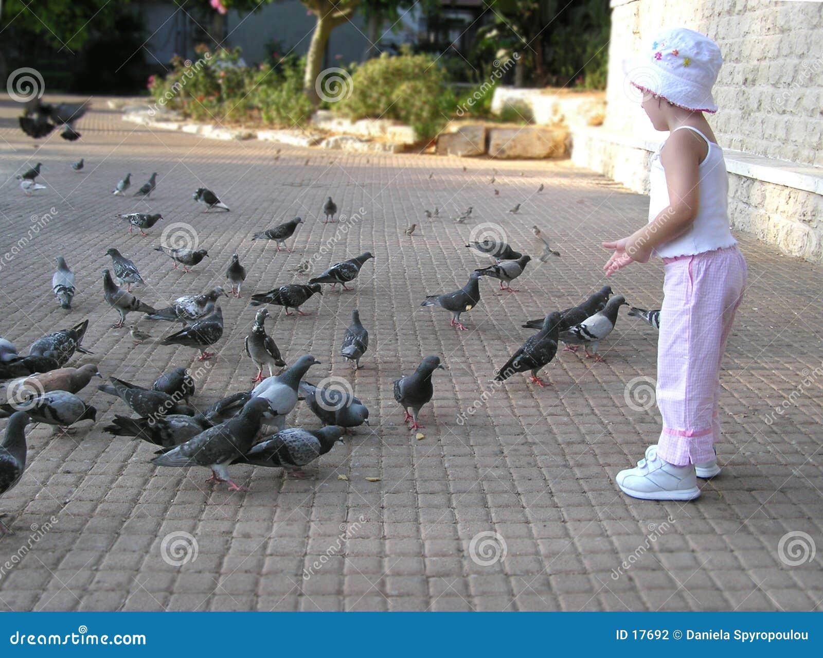 De voedende duiven van het meisje