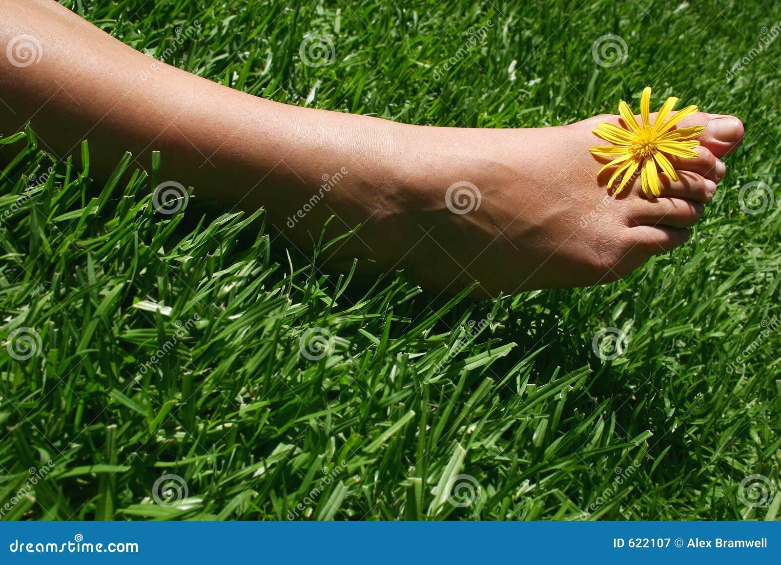 De Voet van het gras