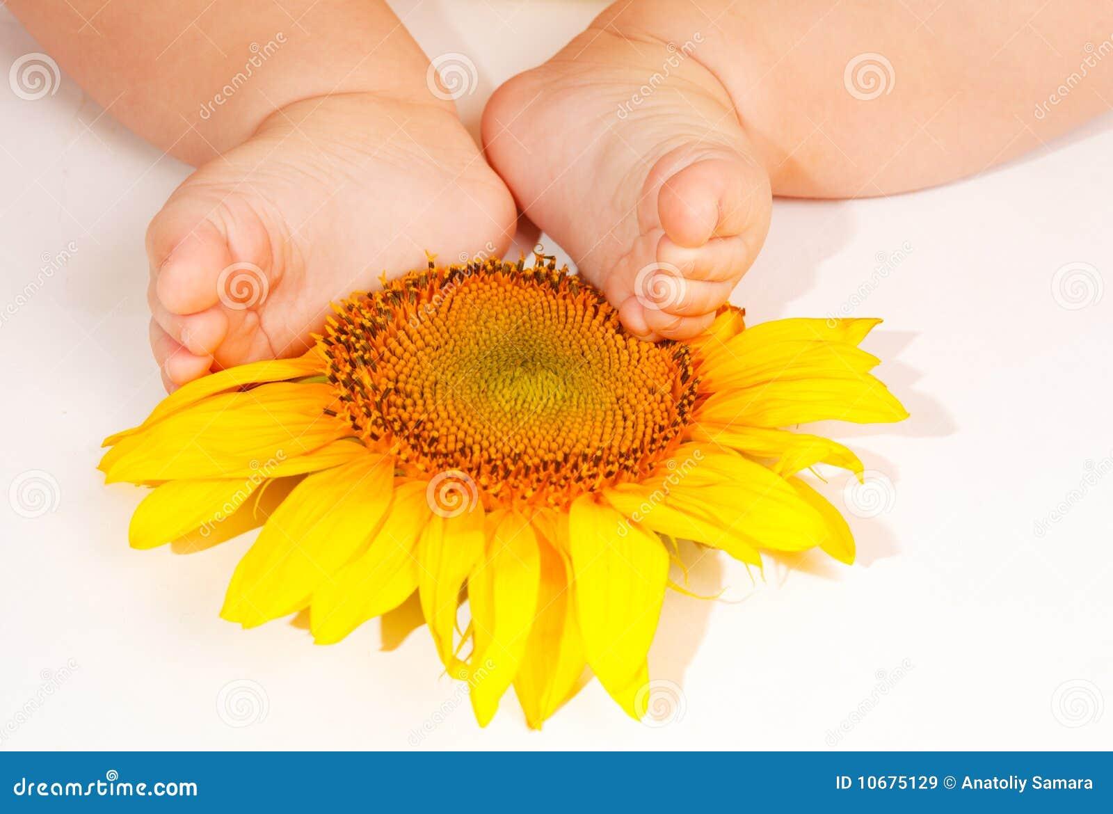 De voeten van de baby op zonnebloem stock afbeelding afbeelding 10675129 - Baby voet verkoop ...