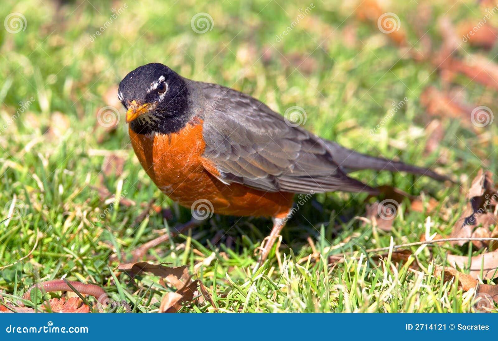 De vogel Ukendt