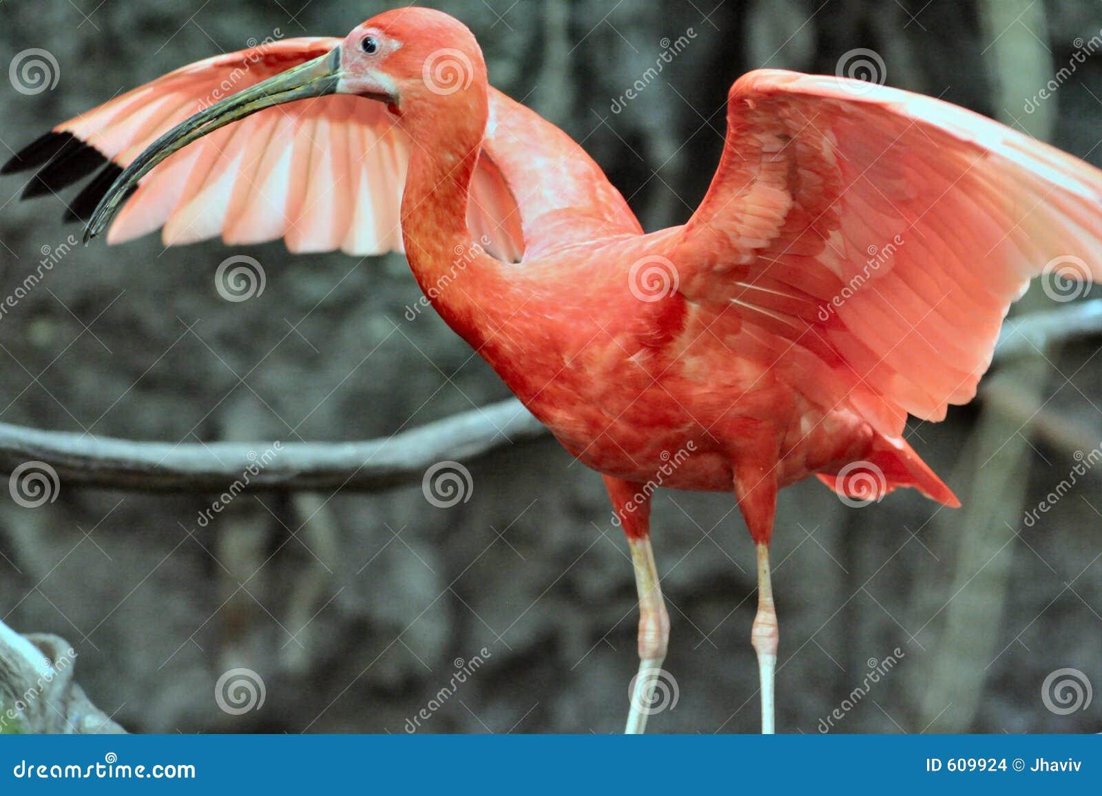 De Vogel van het regenwoud