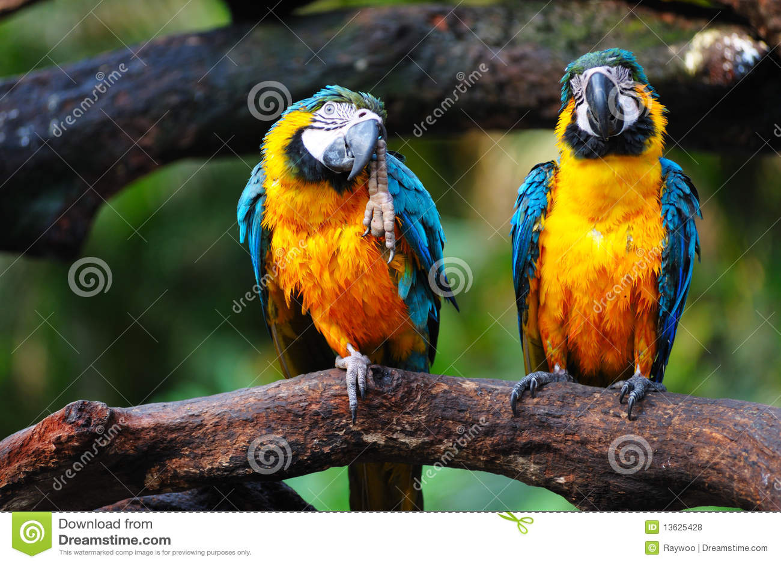 De vogels van de papegaai