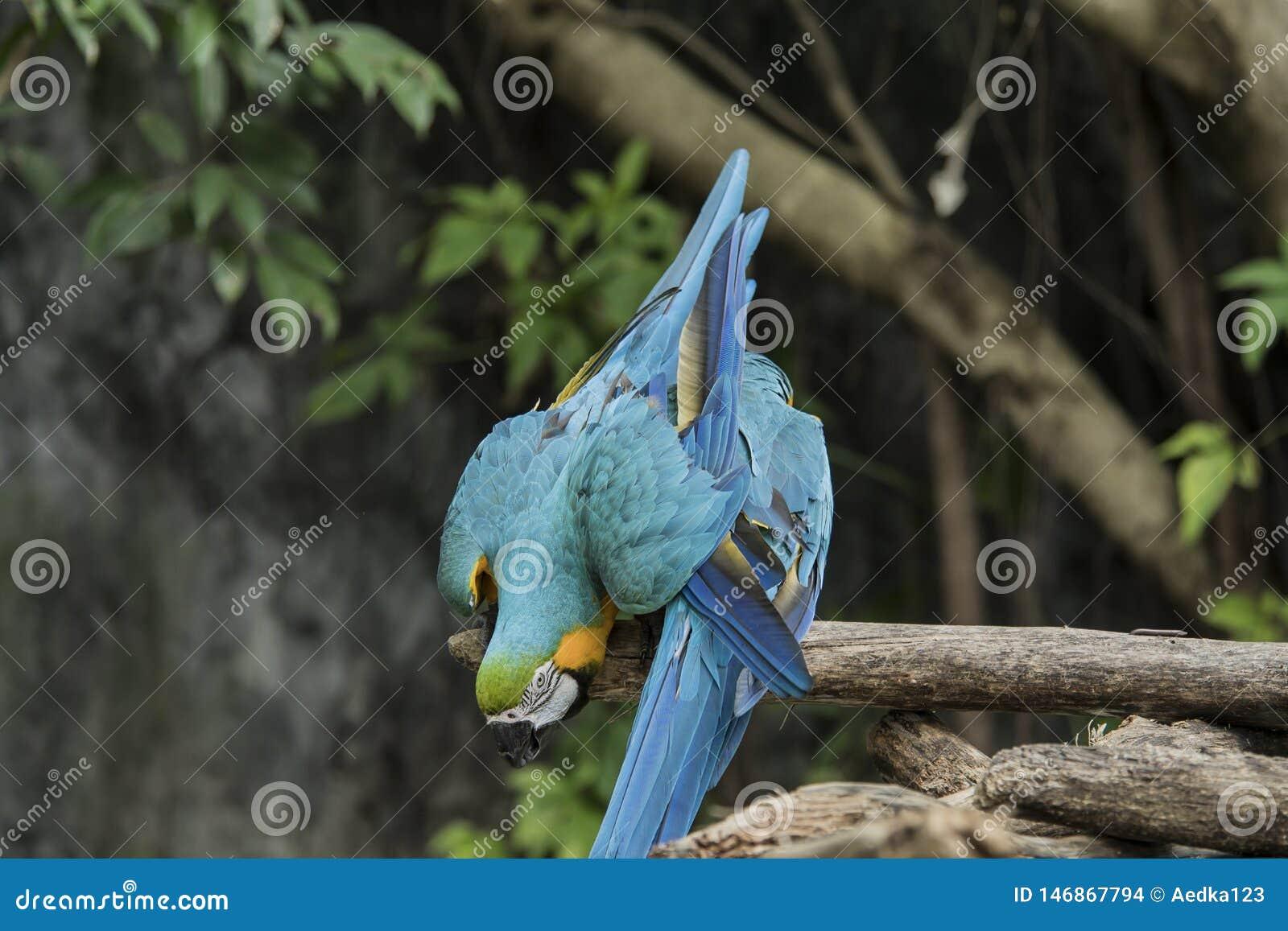 De vogels zijn beperkt in de dierentuin Vogels die vrijheid niet hebben in de wildernis te leven