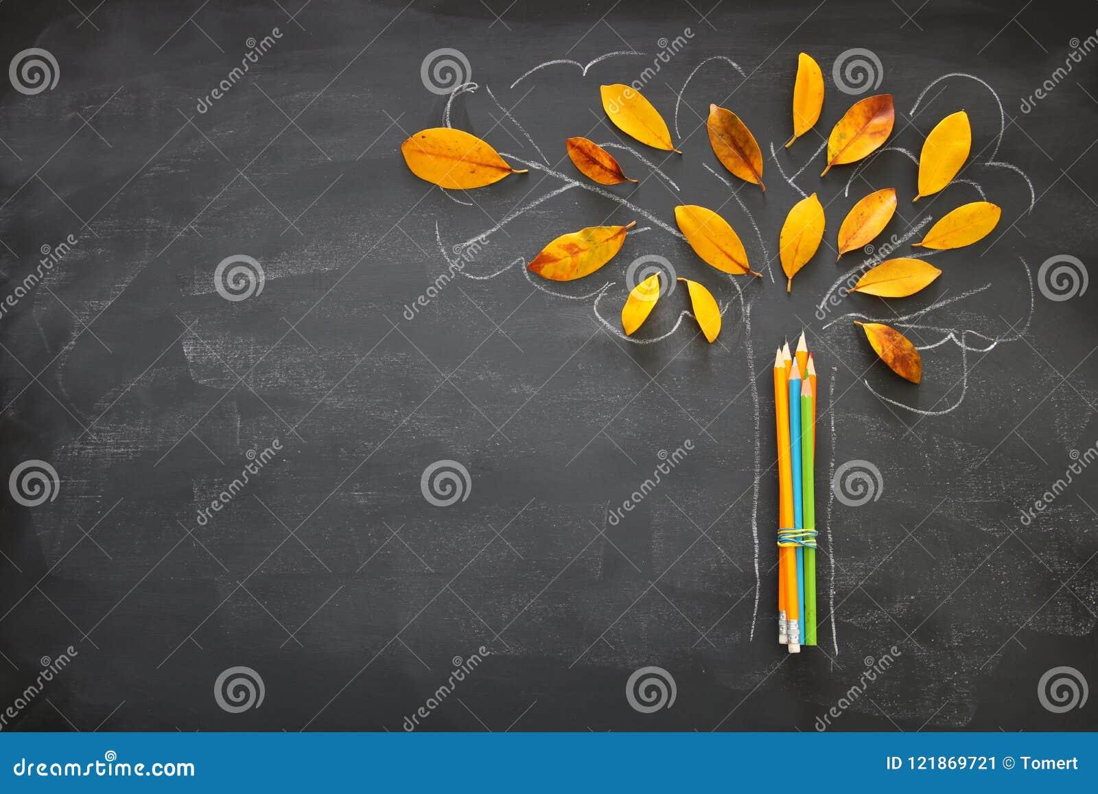 De volta ao conceito da escola Bandeira da vista superior dos lápis ao lado do esboço da árvore com as folhas secas do outono sob