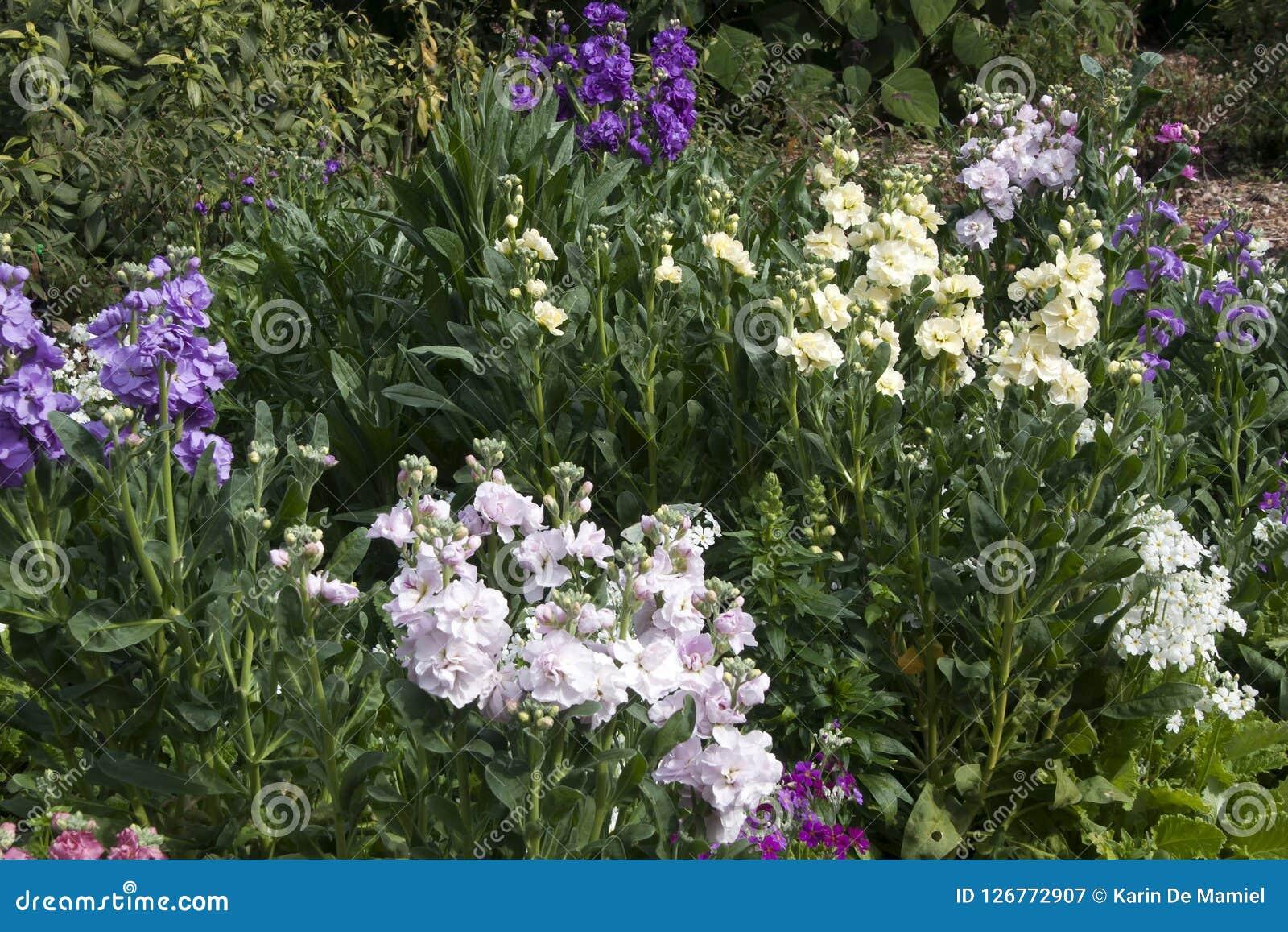 De voorraadbloemen zijn uit, is de lente op zijn manier
