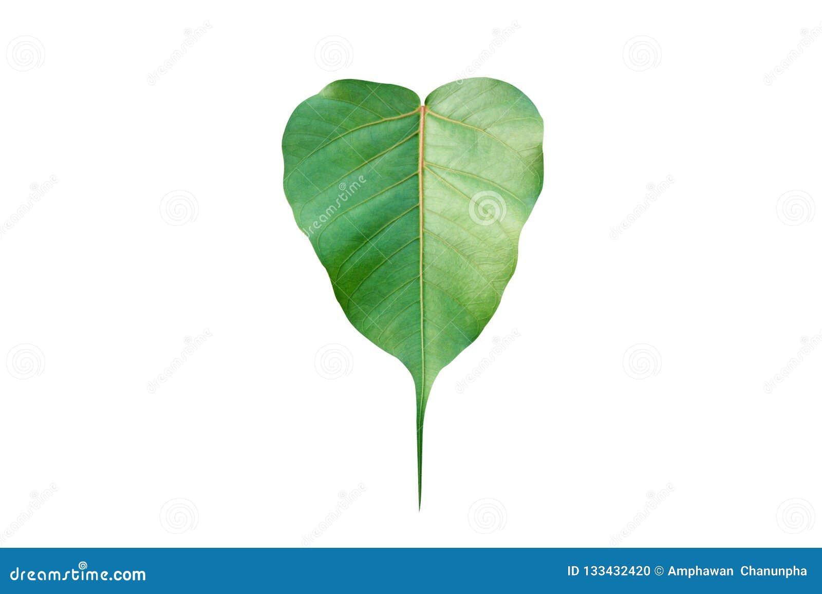 De vorm van het patroonhart van groen blad