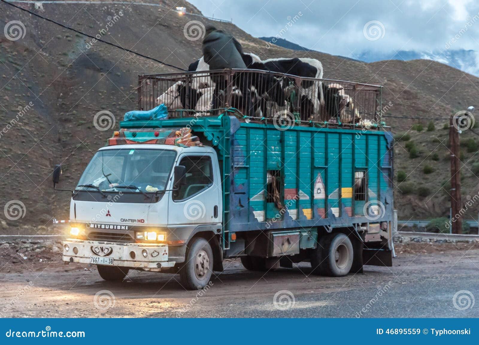 De Vrachtwagen Van Het Veevervoer In Marokko Redactionele
