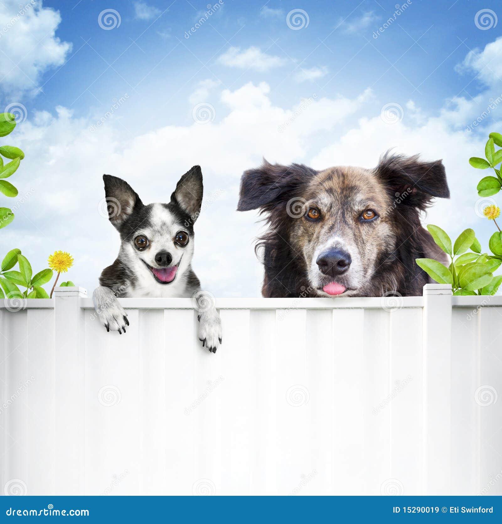 De vrienden van de hond