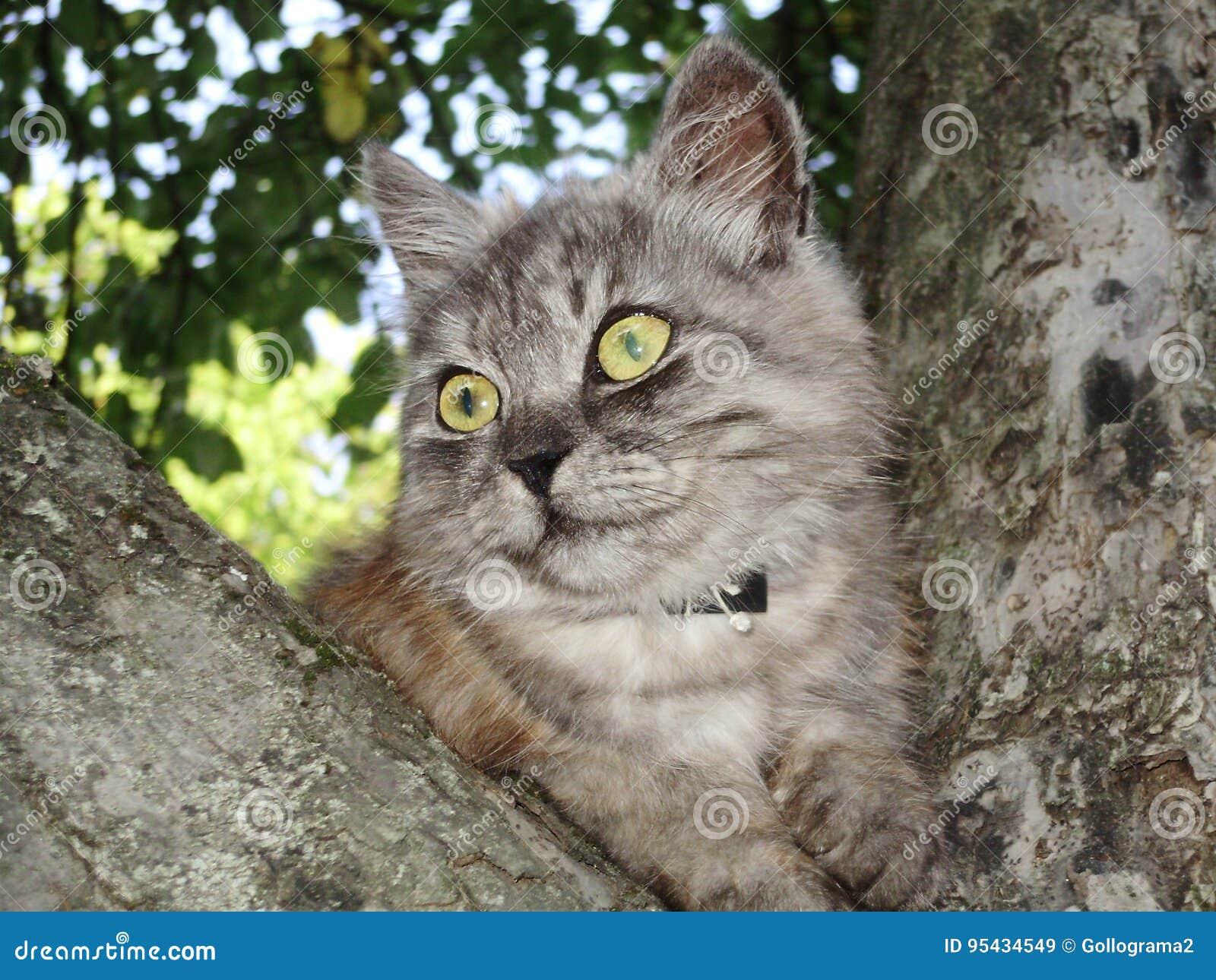 De vrije illustraties van de kattenpersifona van fotodieren grijze jpg