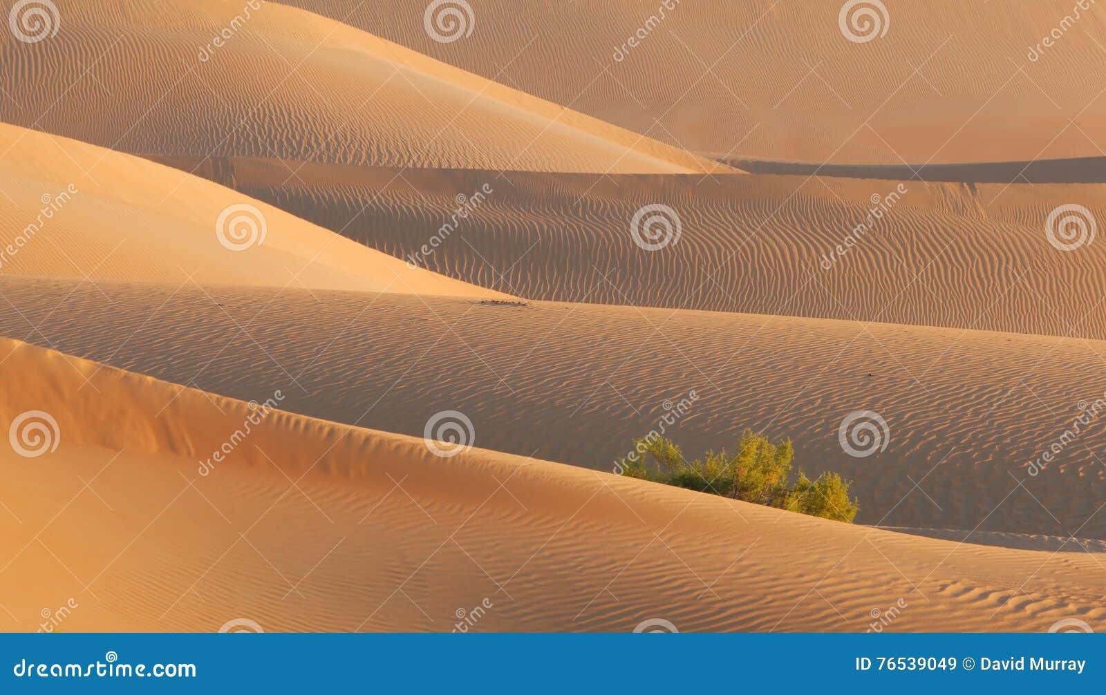 De vroege Textuur van het het Zandduin van de Ochtendwoestijn