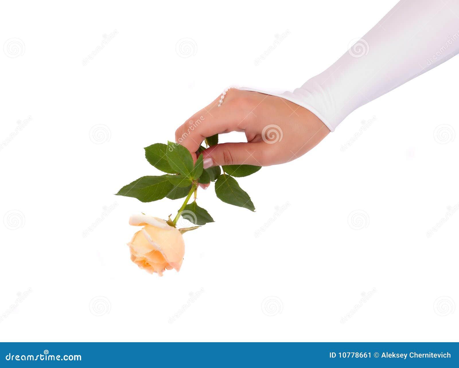 De vrouw dient huwelijkshandschoen met in toenam
