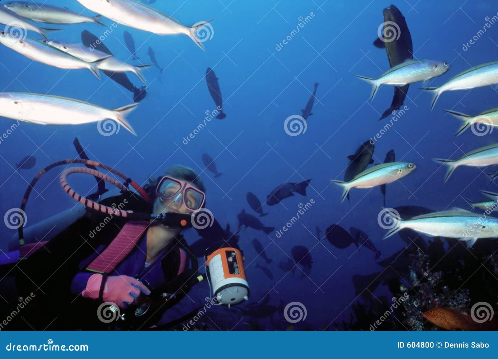 De vrouwelijke Duiker en School van Vissen
