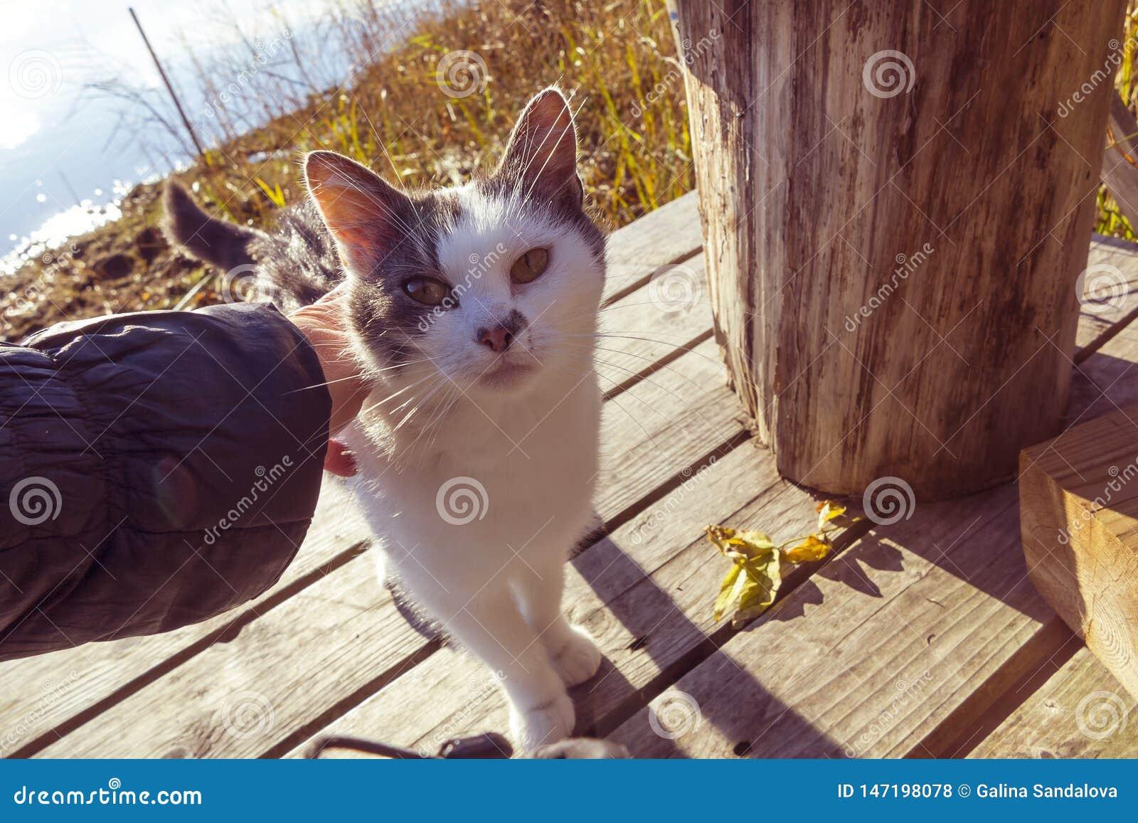 De vrouwelijke hand strijkt een kat op een houten pijler op het meer
