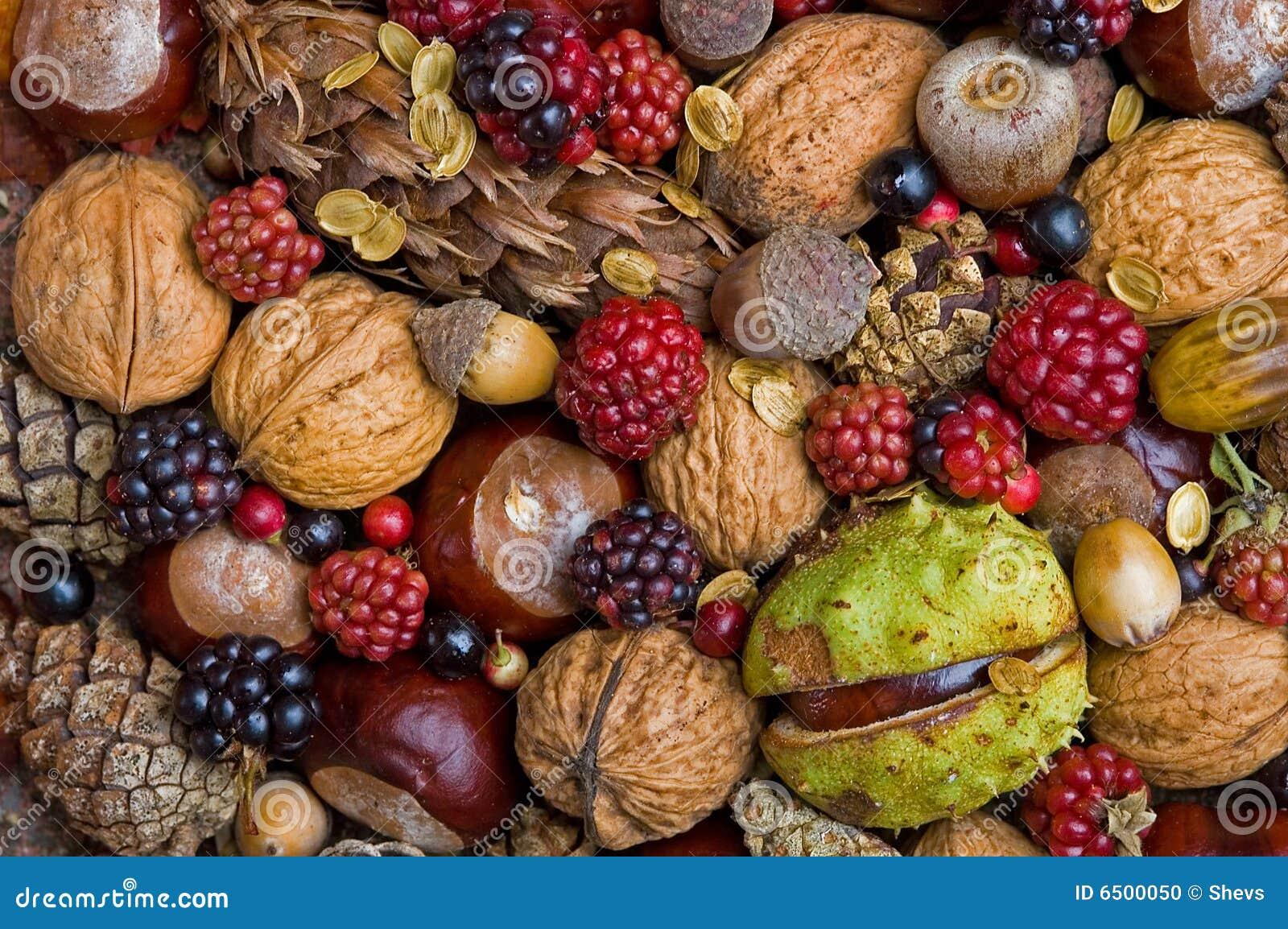 De vruchten van de herfst