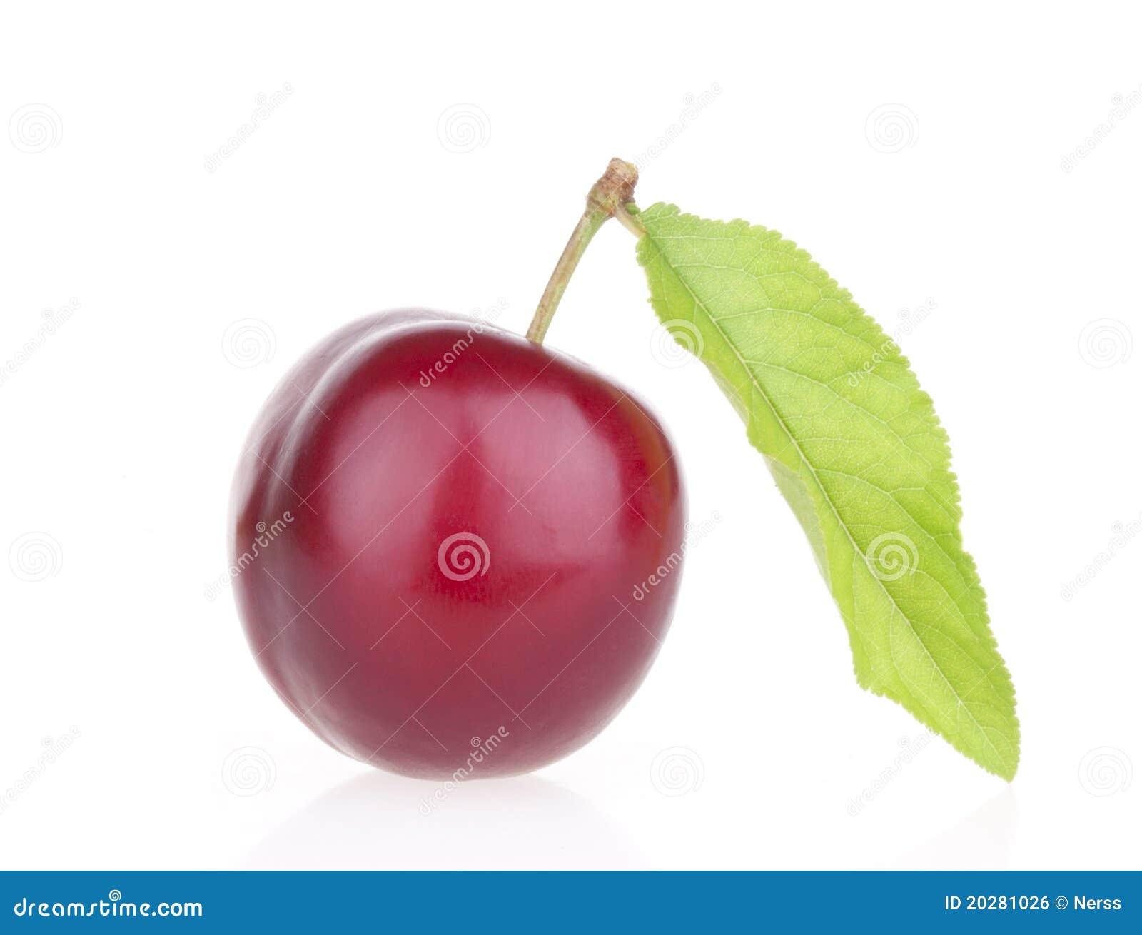 De vruchten van de pruim met blad