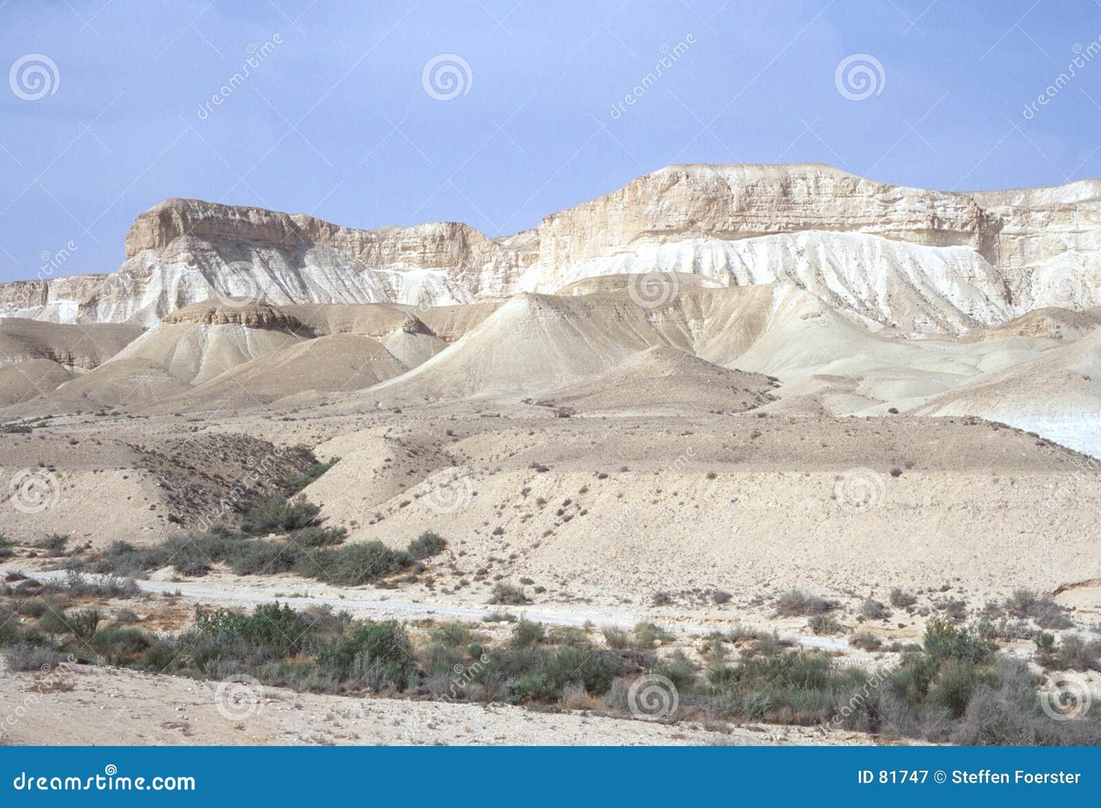 De Wadi van de woestijn