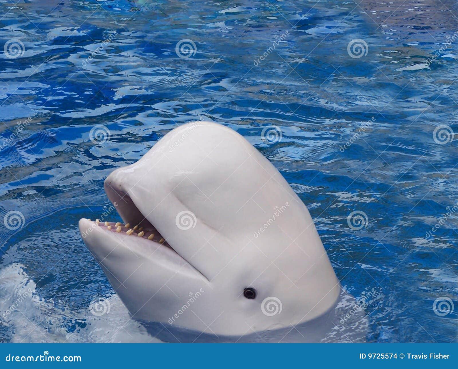 Fotos de ballenas con cuerno 32