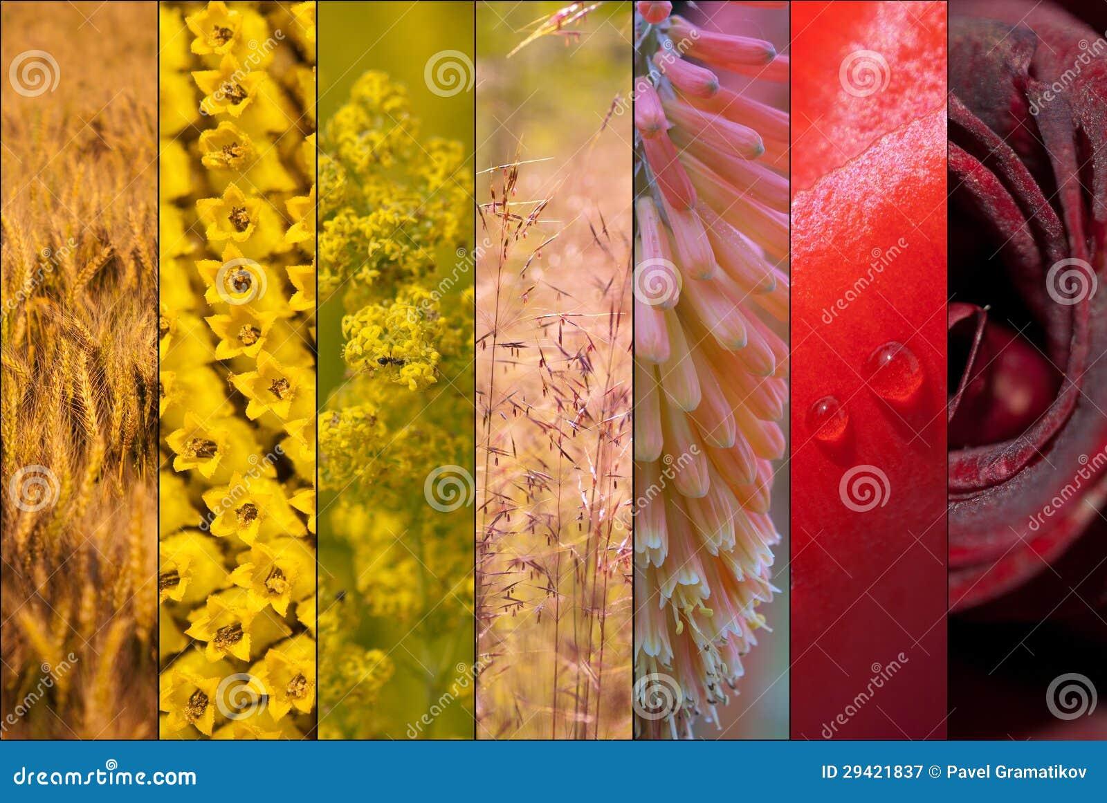 De warme collage van de lente stock afbeelding afbeelding