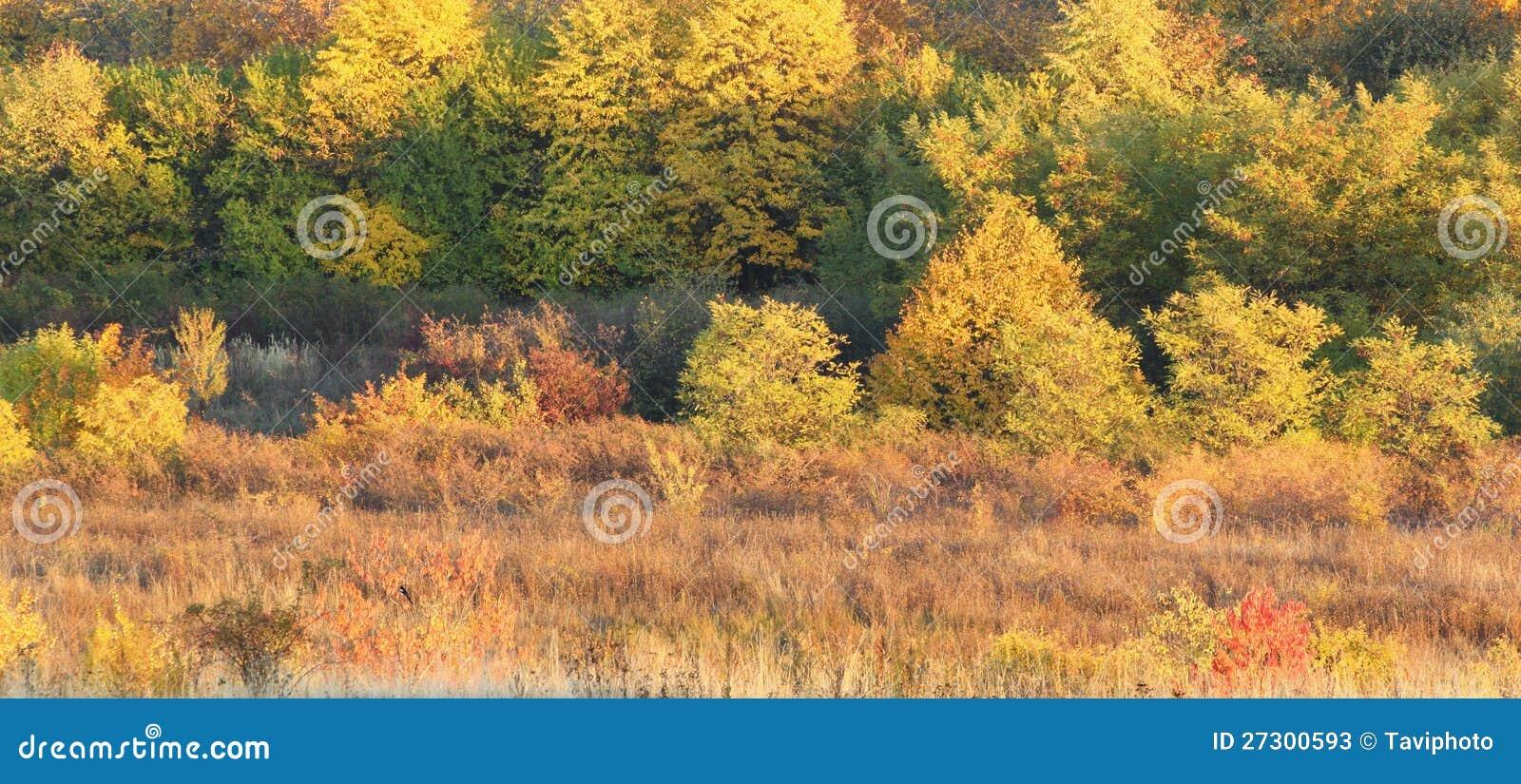 De warme kleuren van de herfst stock afbeelding afbeelding