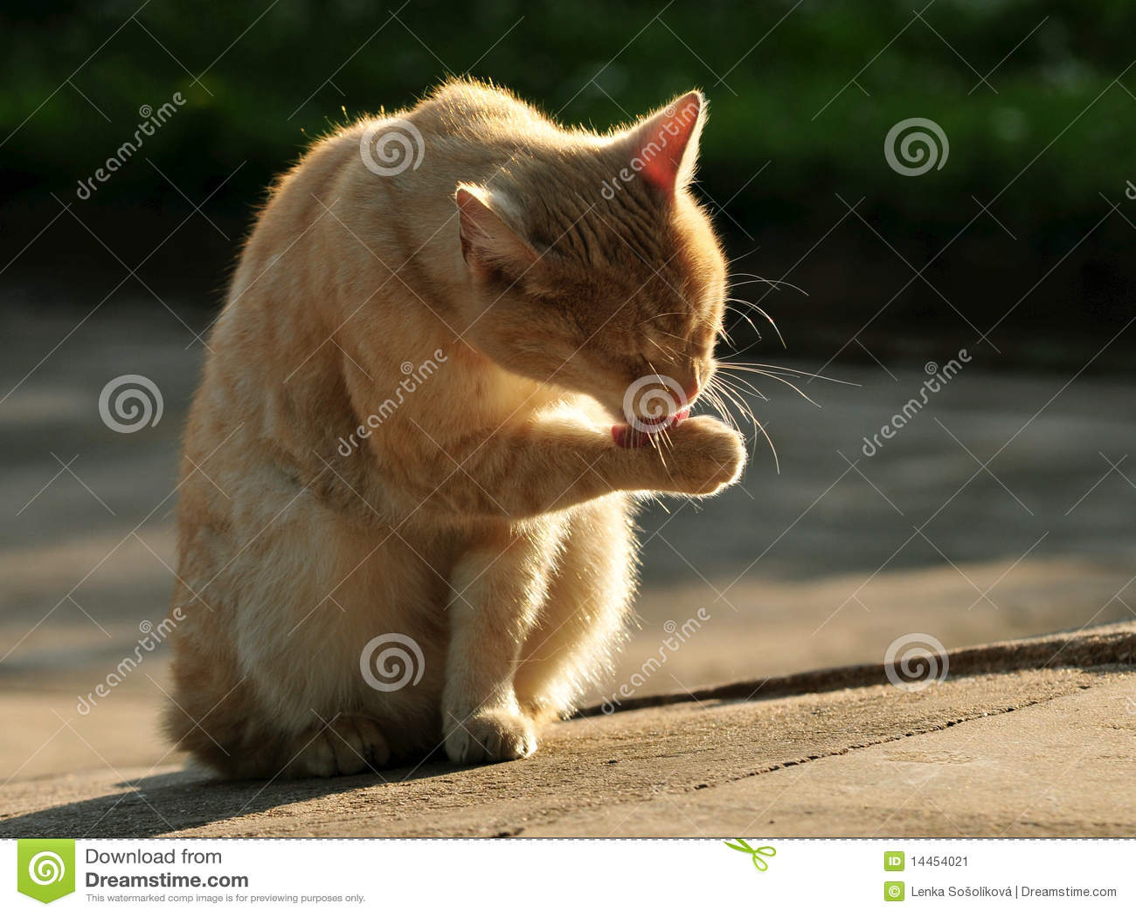 De was van de kat