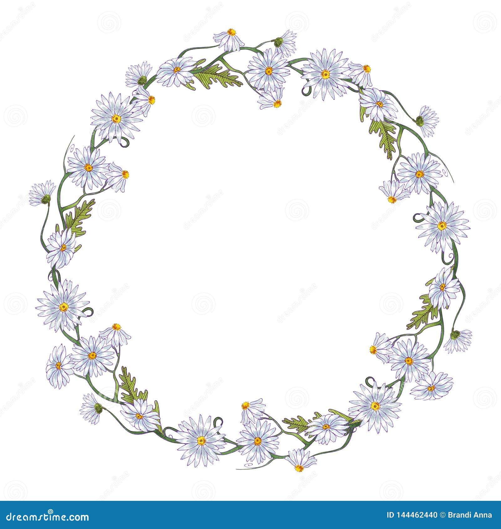 De waterverf bloeit kaderkroon de lente Kamilles en bladeren