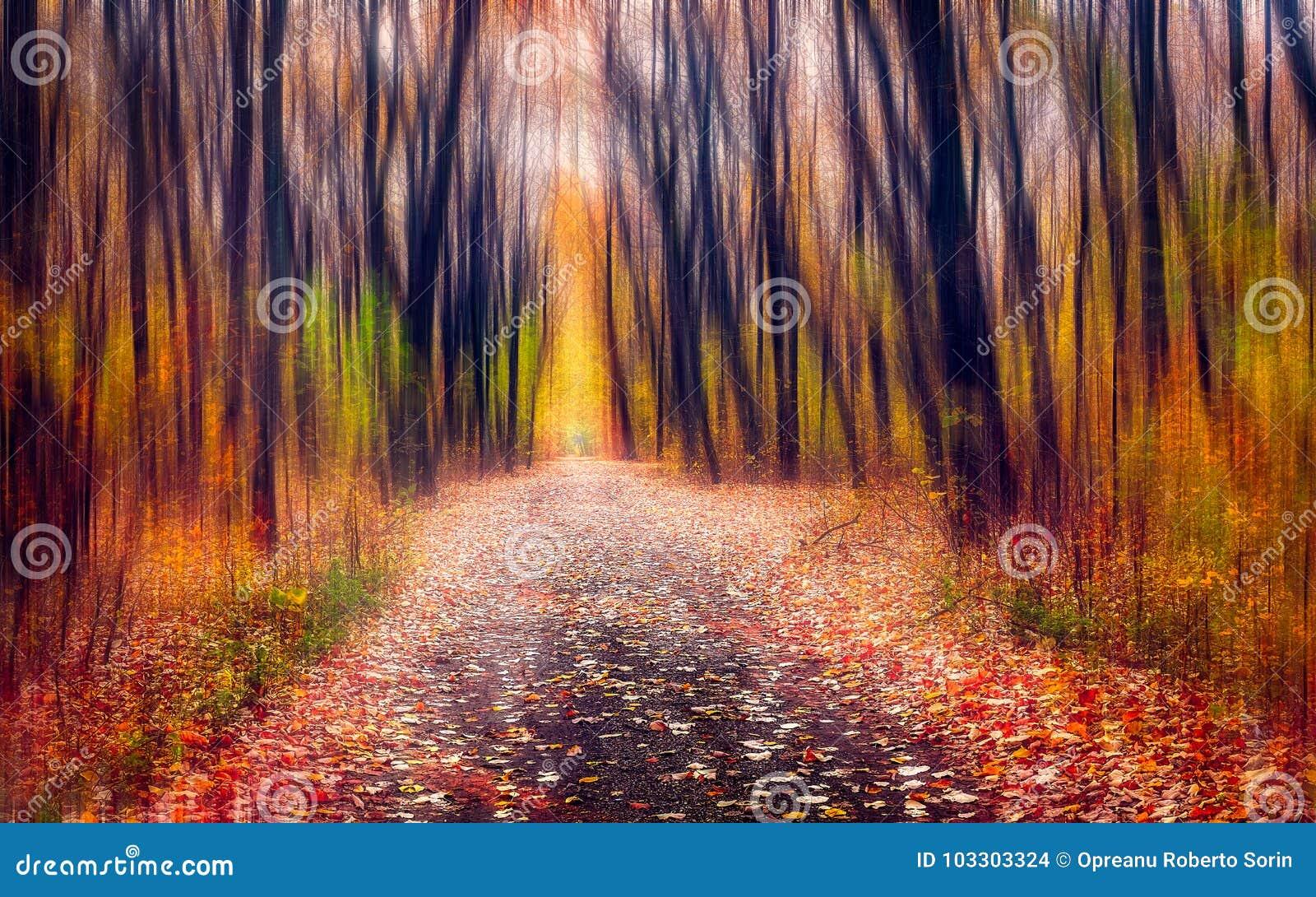 De weg door het magische bos