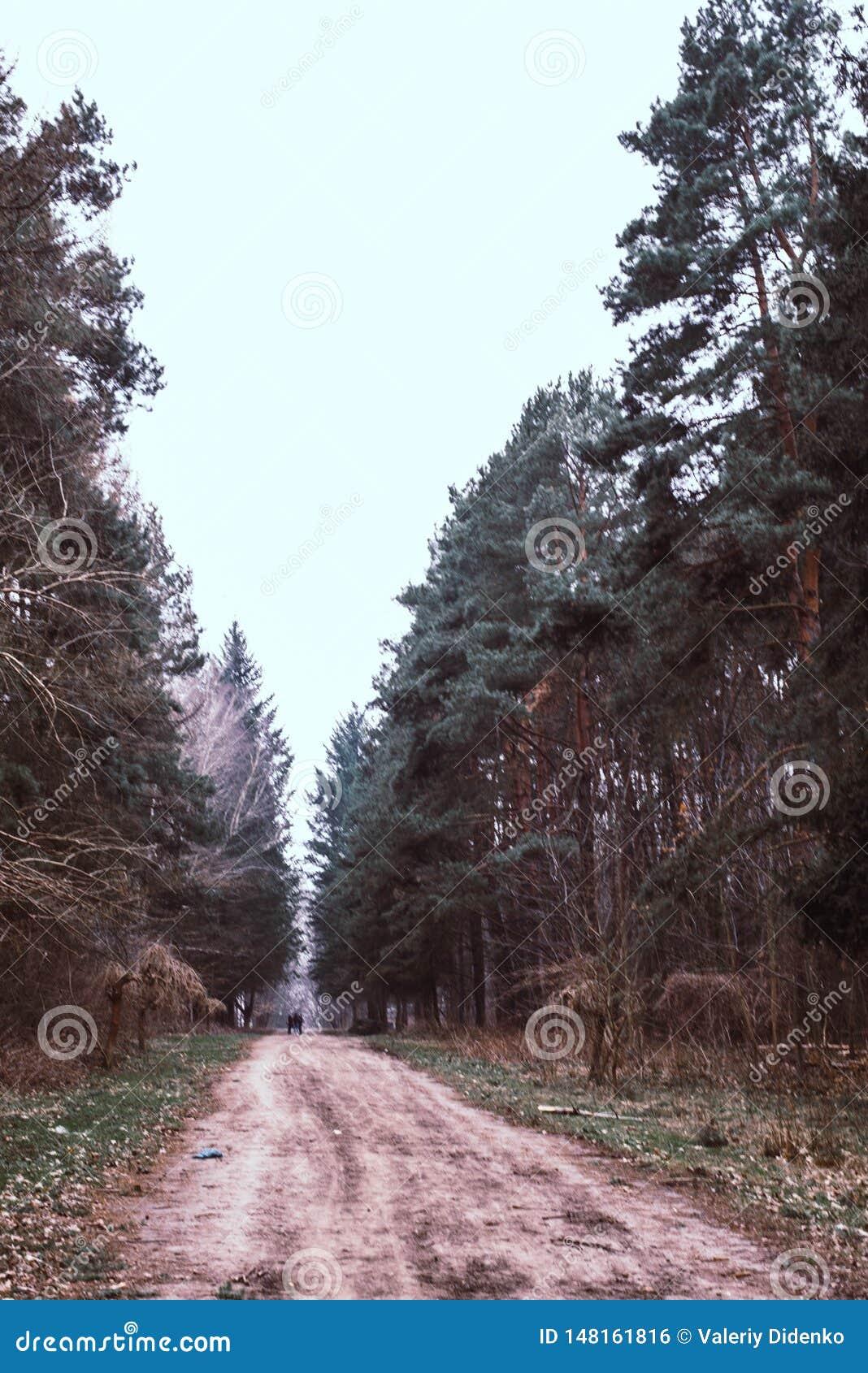 De weg is een weg in het hout