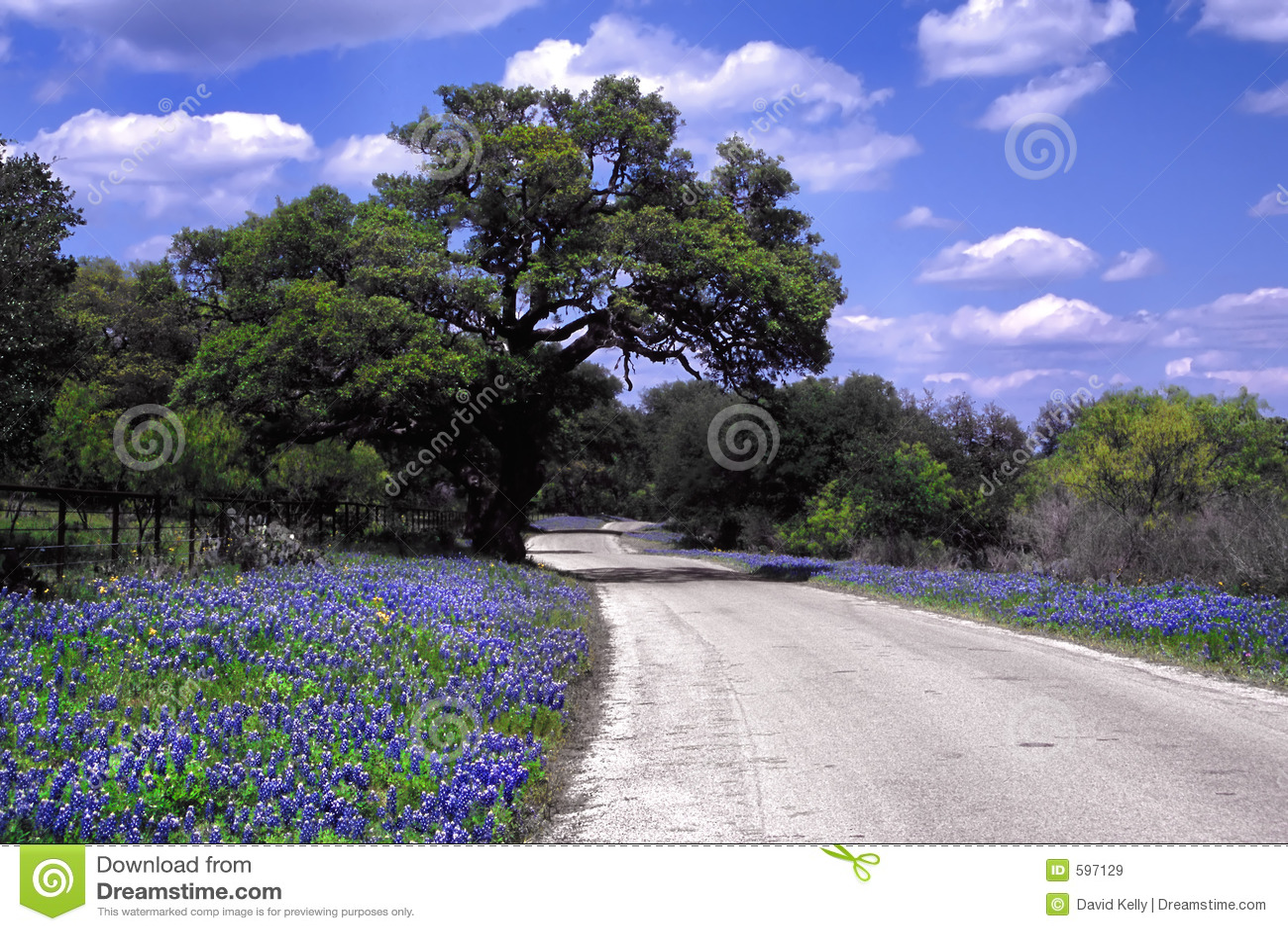 De Weg van Bluebonnet