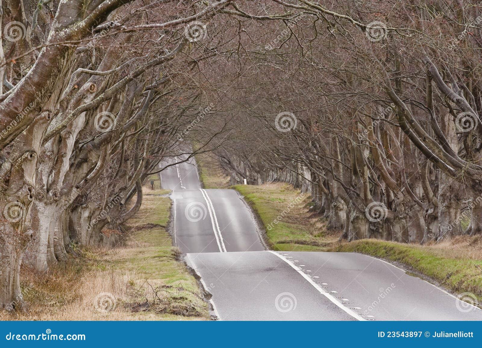 De weg van de beuk