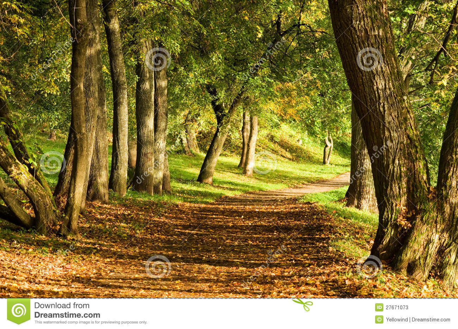 De weg van de daling in bos