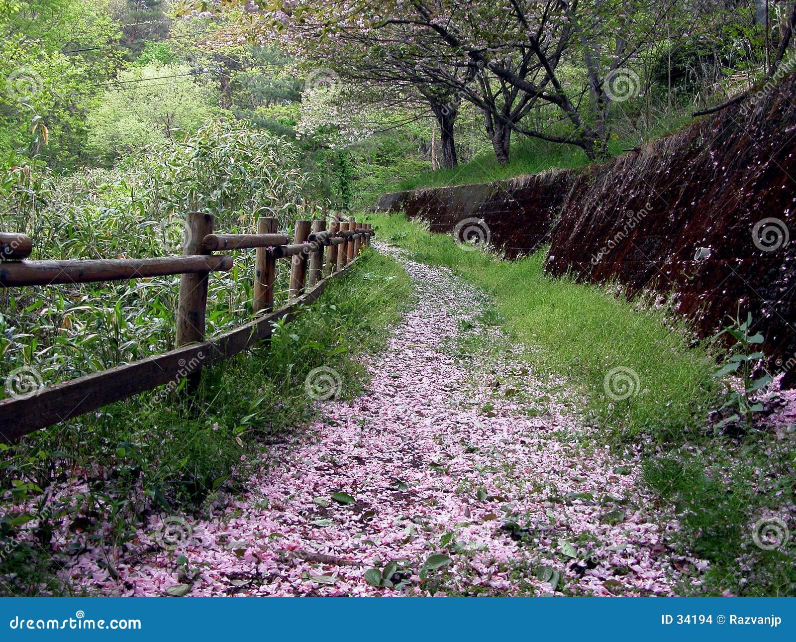 De weg van de lente