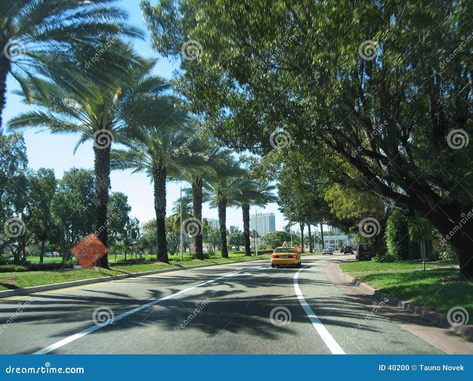 De weg van de palm