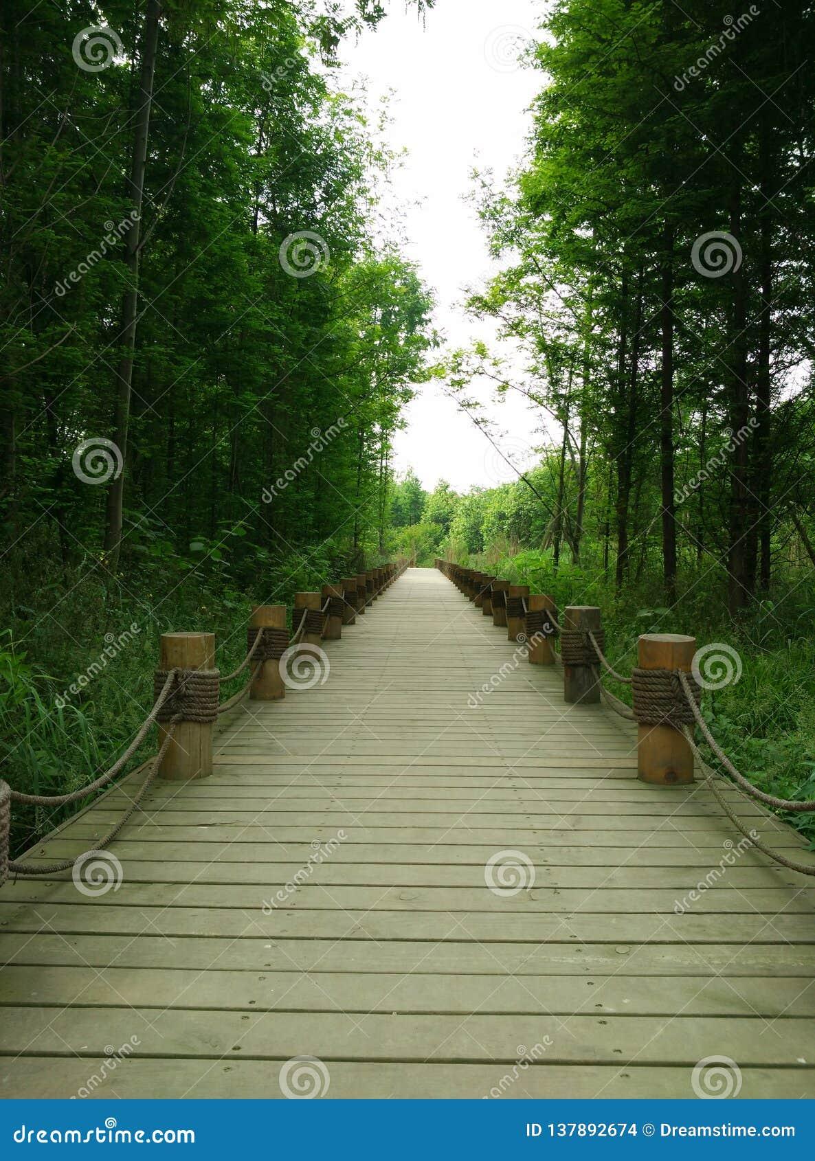 De weg van het moerasland