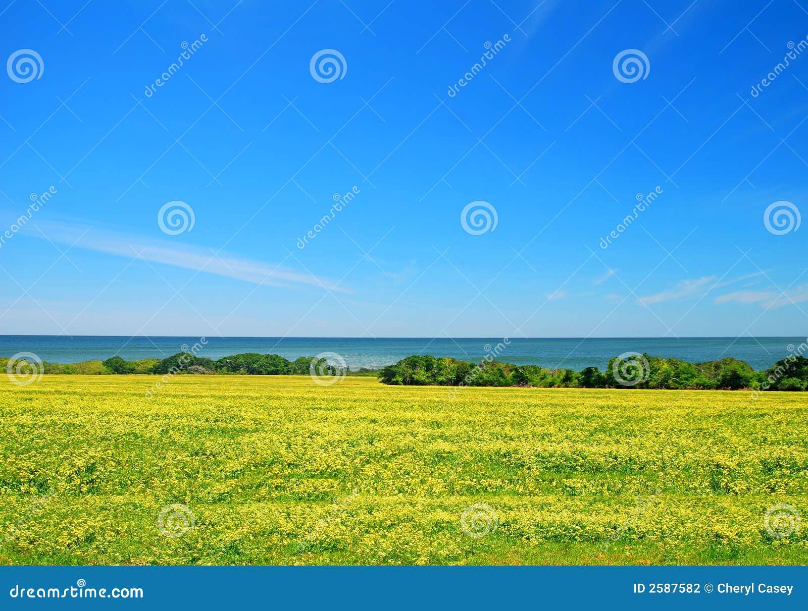 De Weide van de kust