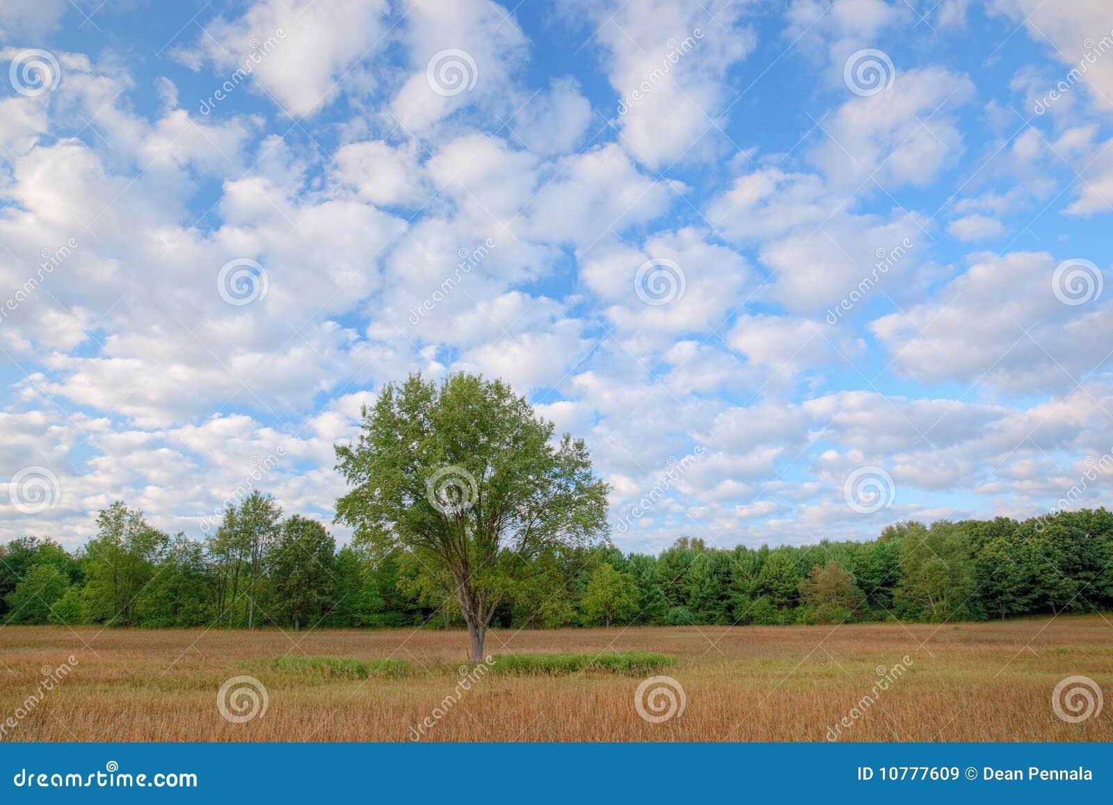 De Weide van de zomer