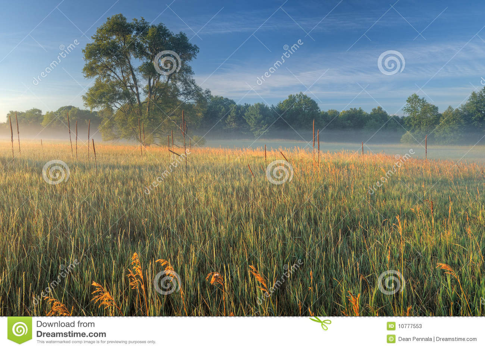 De Weide van de zomer in Mist