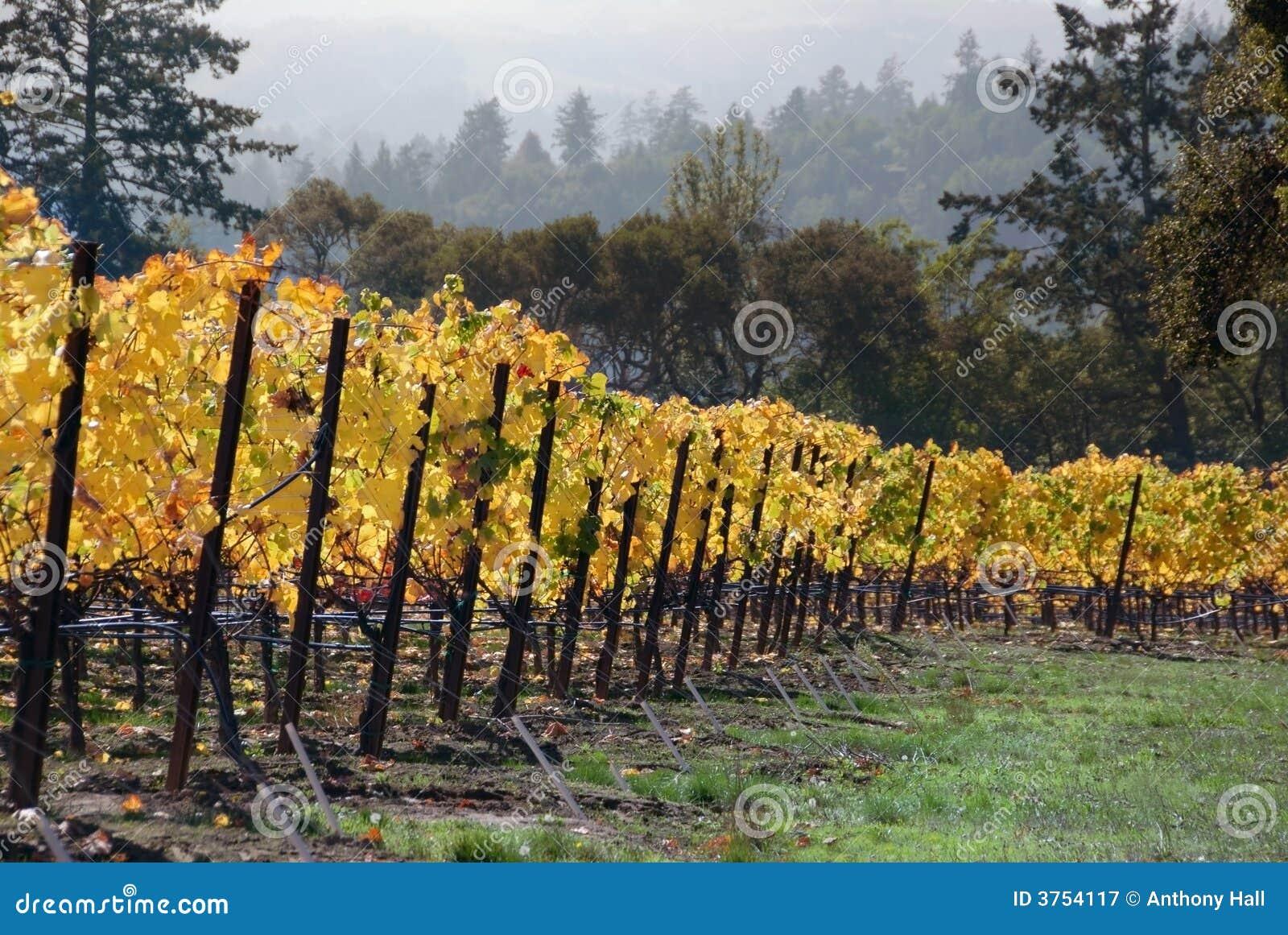 De Wijngaard van de daling