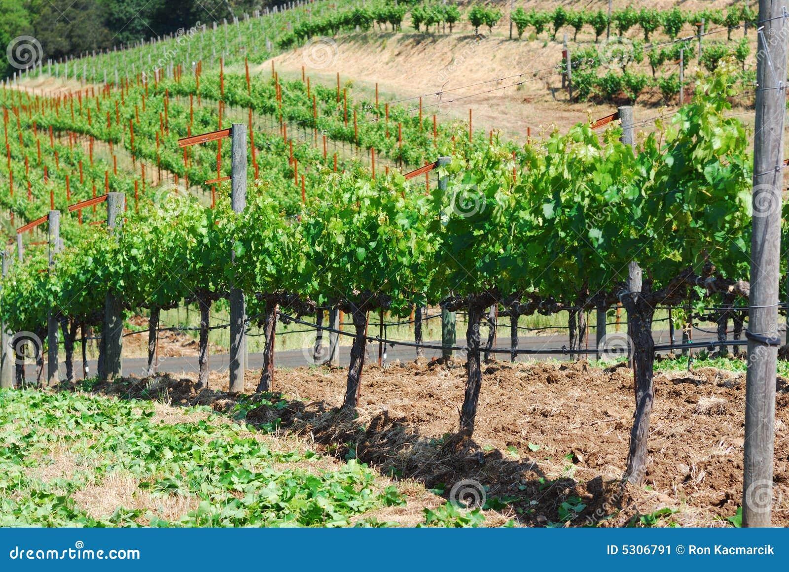De Wijngaard van Sonoma