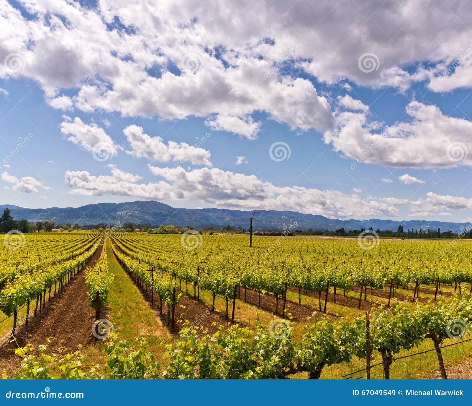 De Wijngaarden van de Napavallei, de Lente, Bergen, Hemel, Wolken