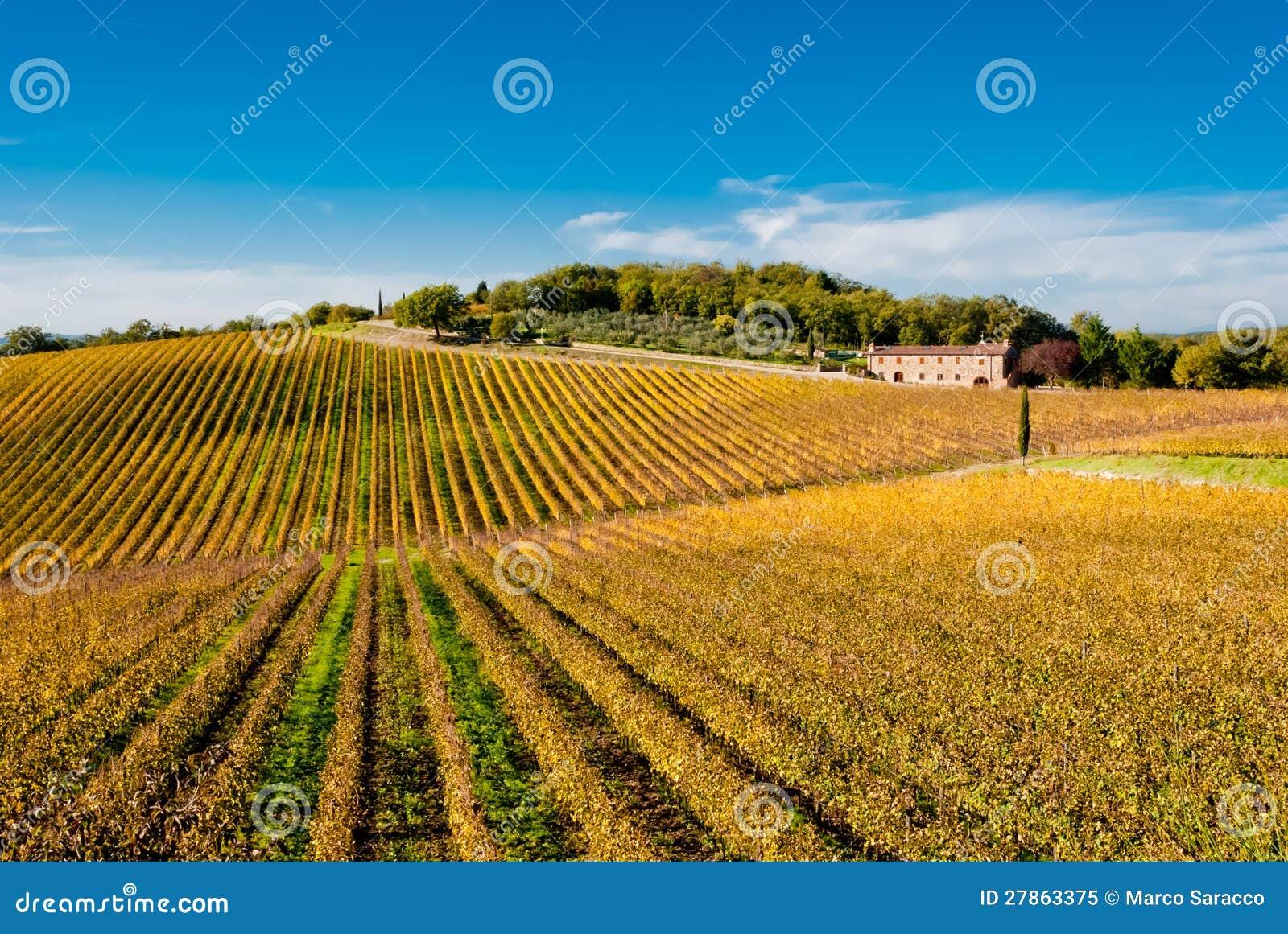 De wijngaarden van het de wijngebied van de chianti, Toscanië