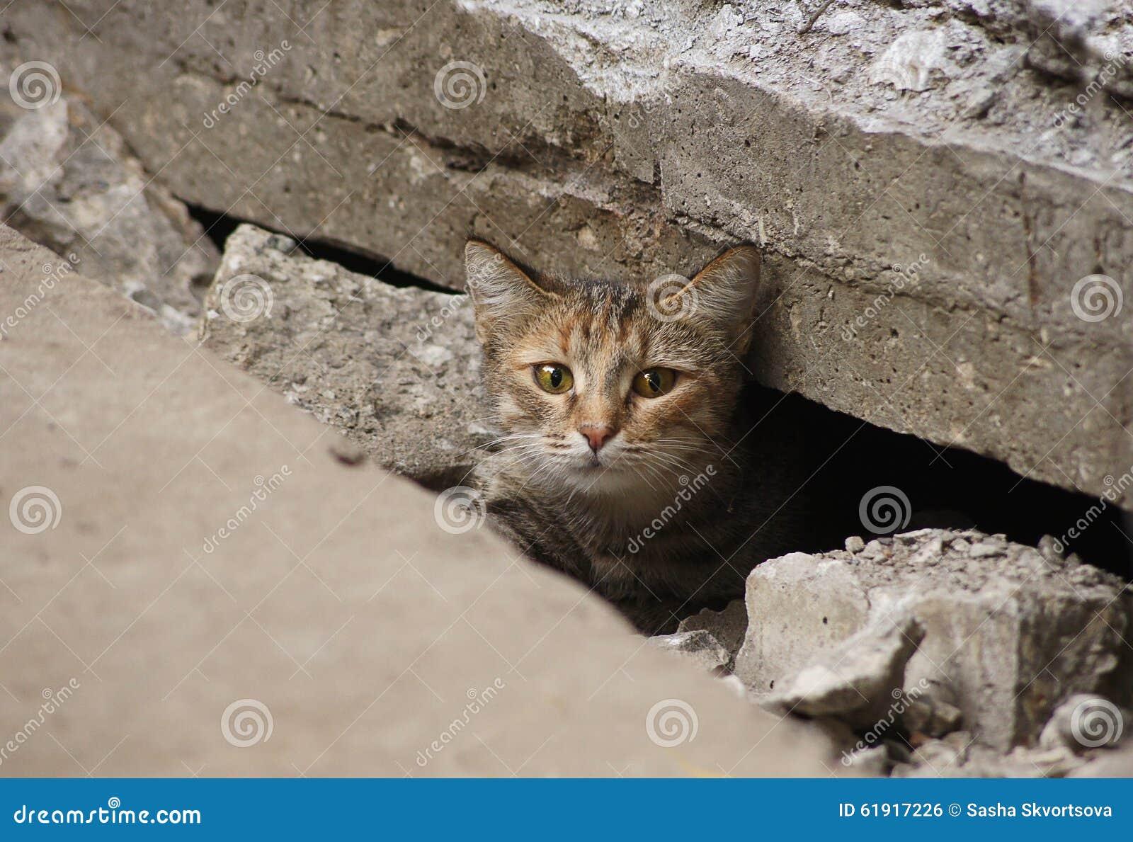 De wilde kat verborg onder de tegels van de weg